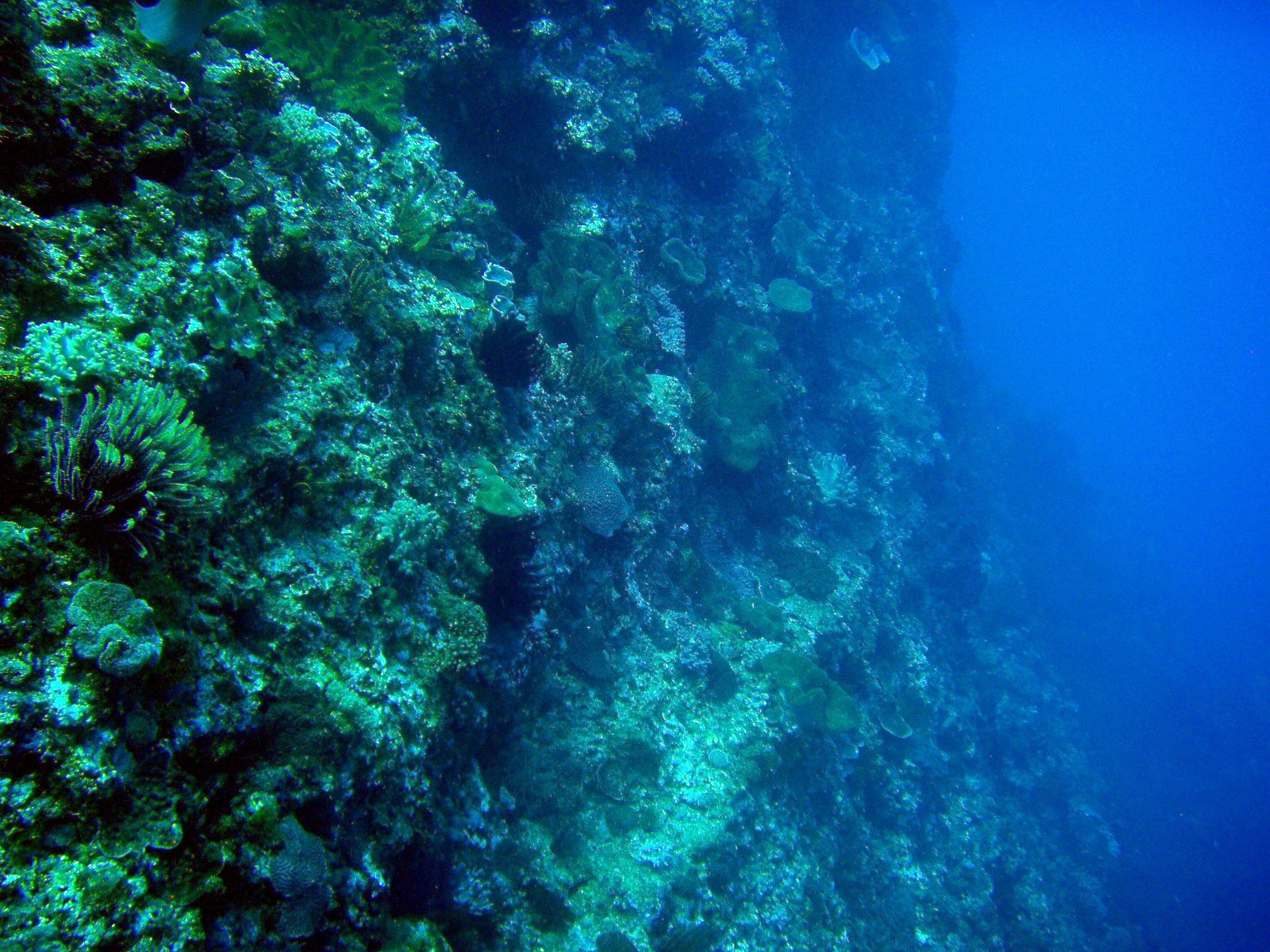 wall dive in nanwan bay.jpg