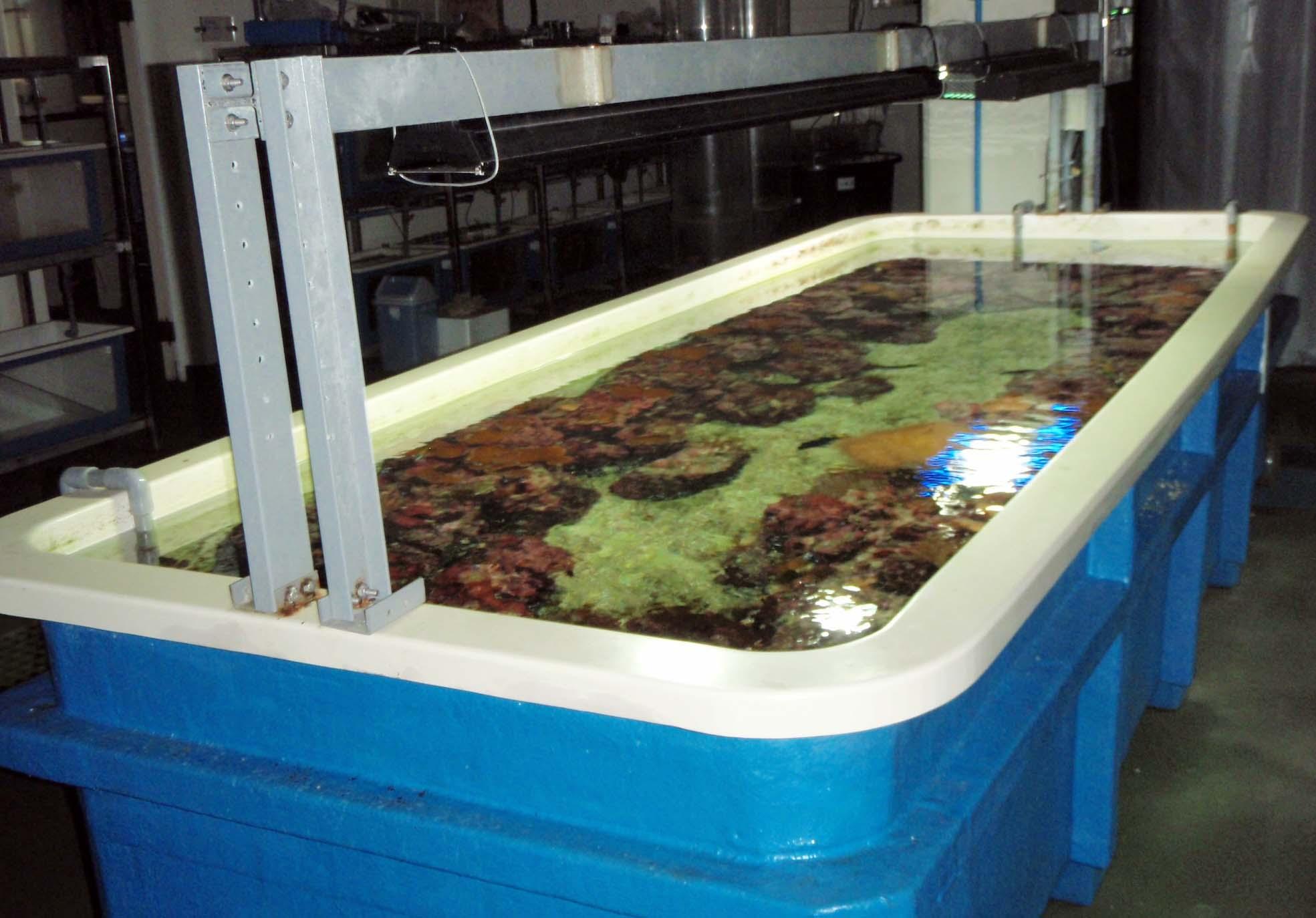 coralarium.jpg
