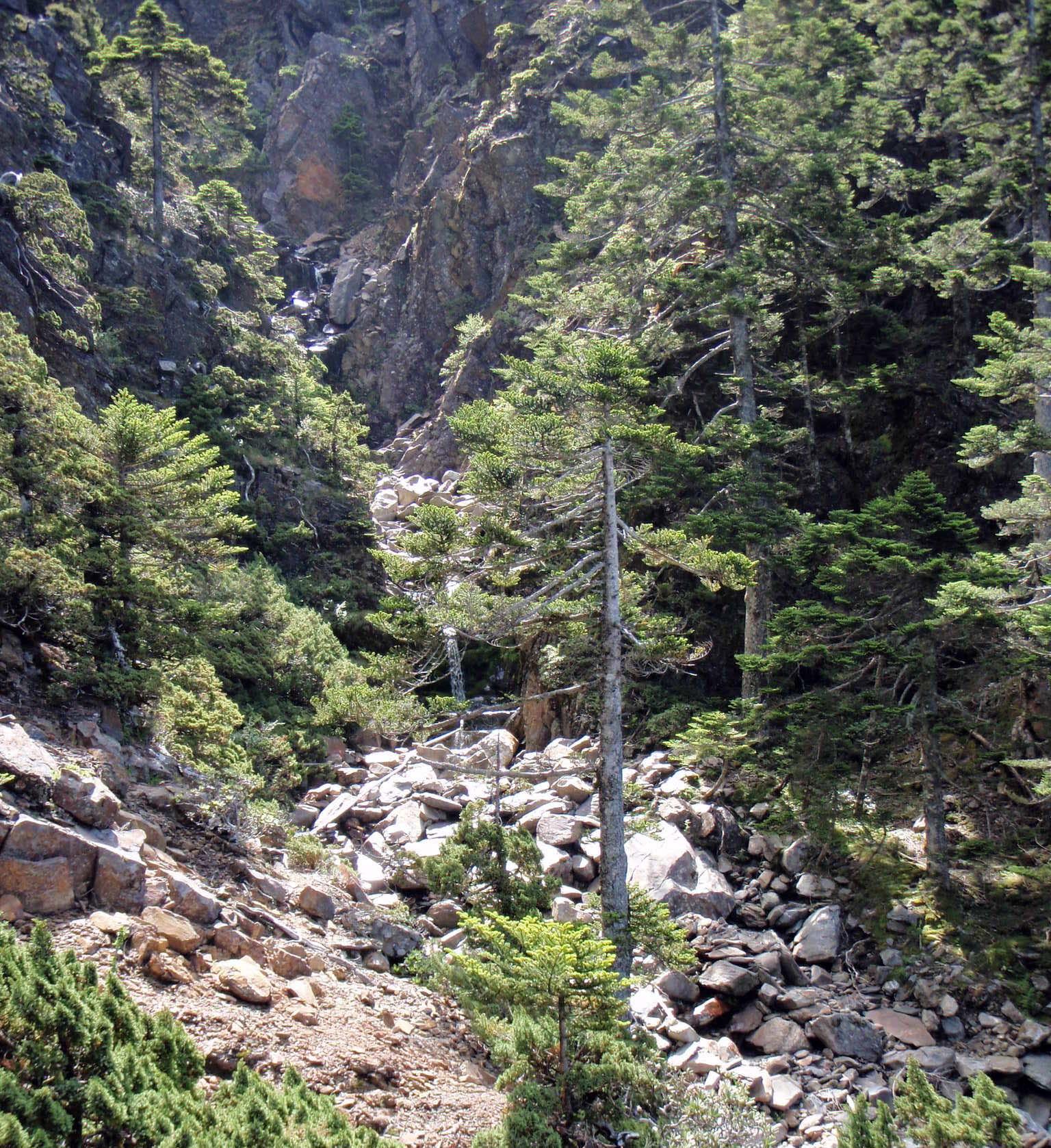 Yushan National Park 7.jpg
