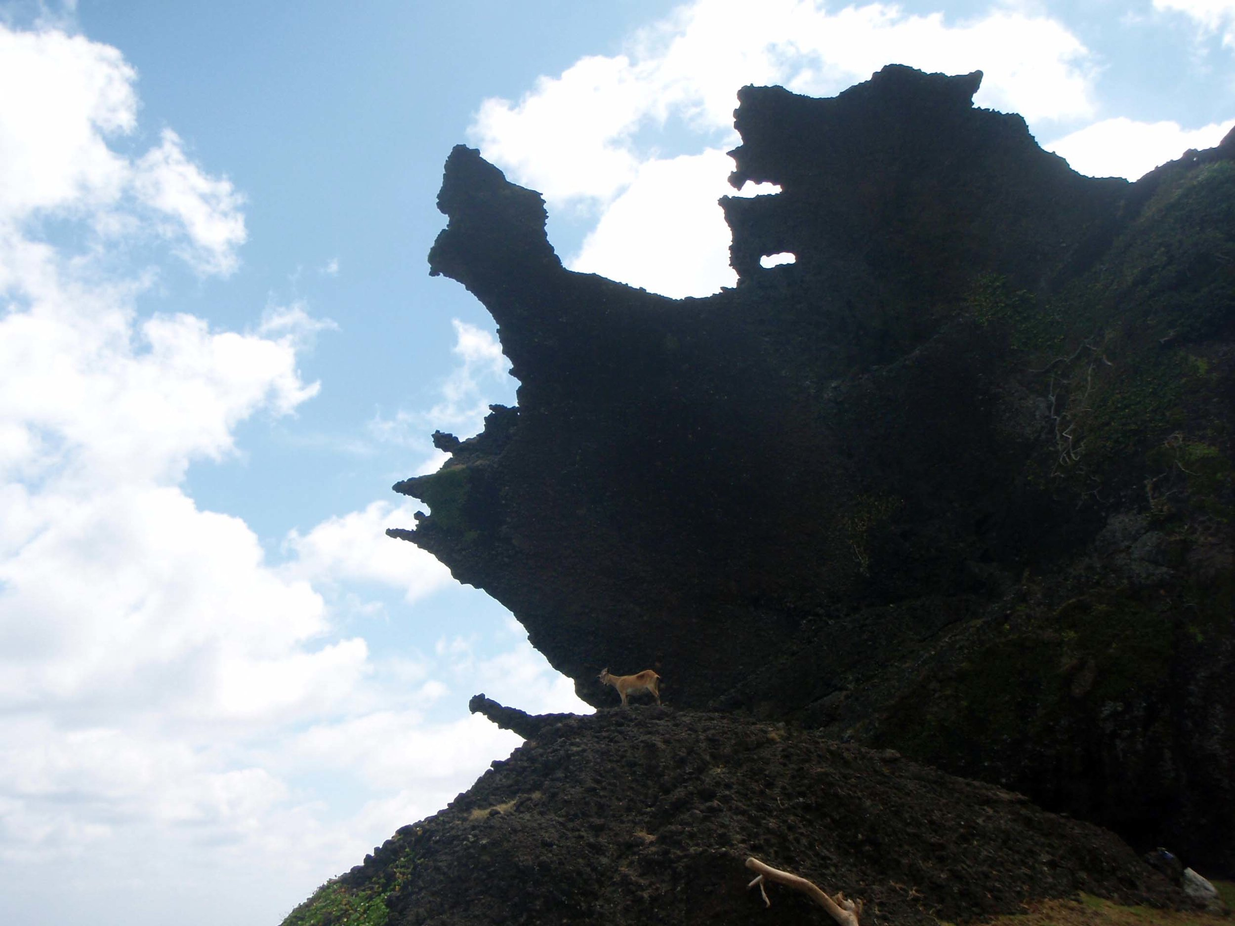 Dragon head rock and goat.jpg