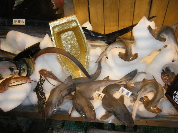 sharks for sale.jpg