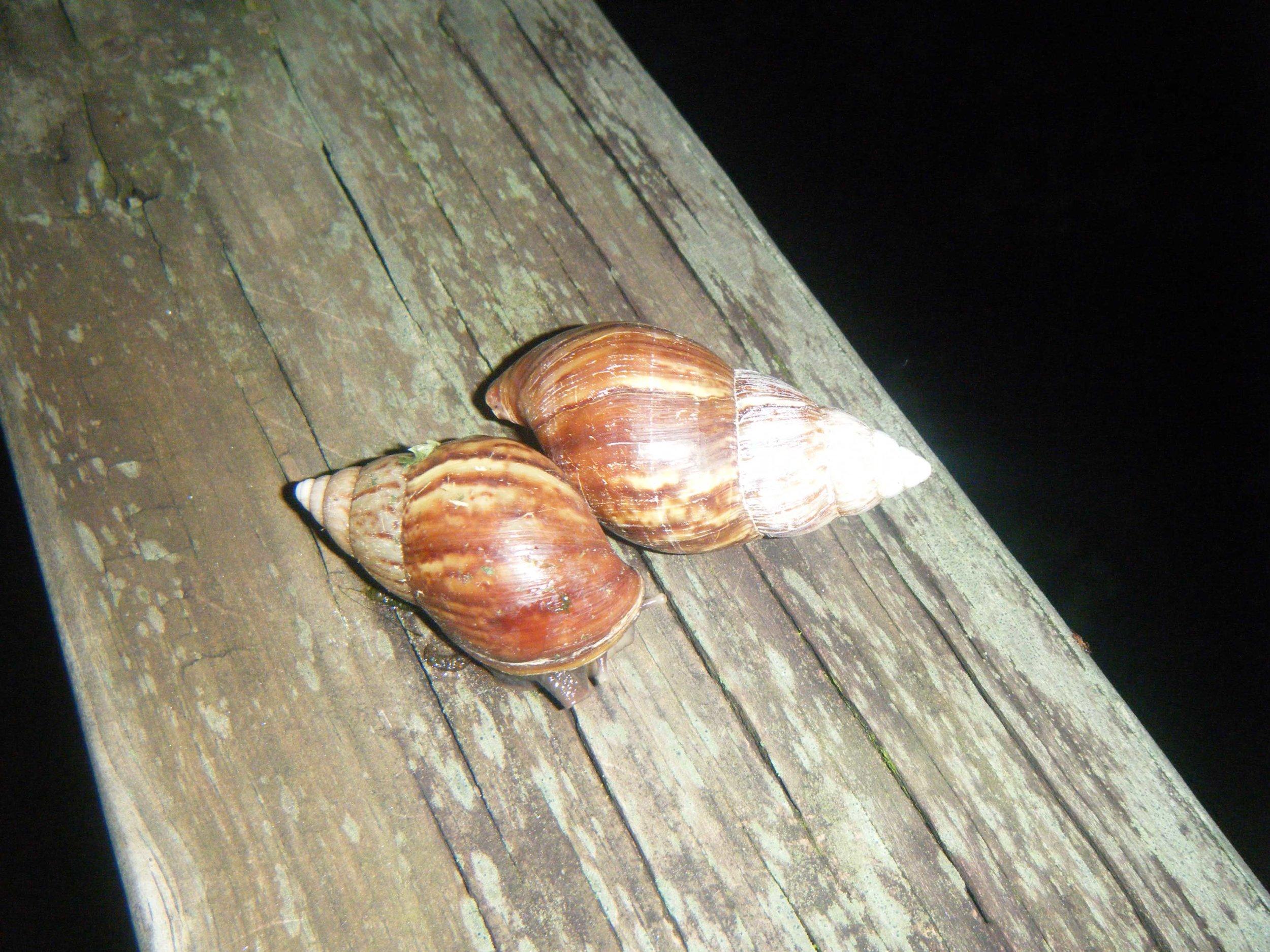 night snail action.jpg