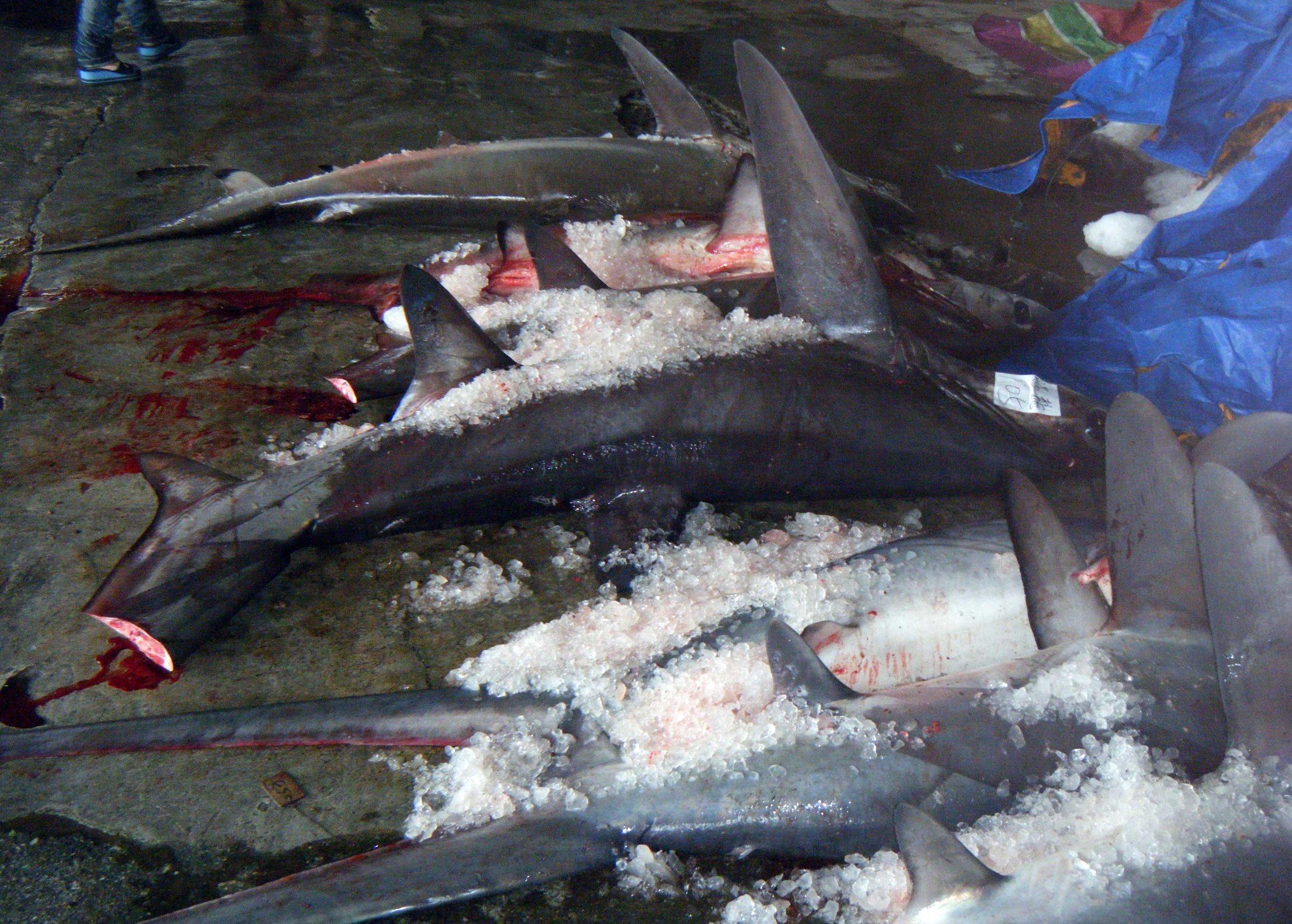 Chengkung fishery harbor.jpg
