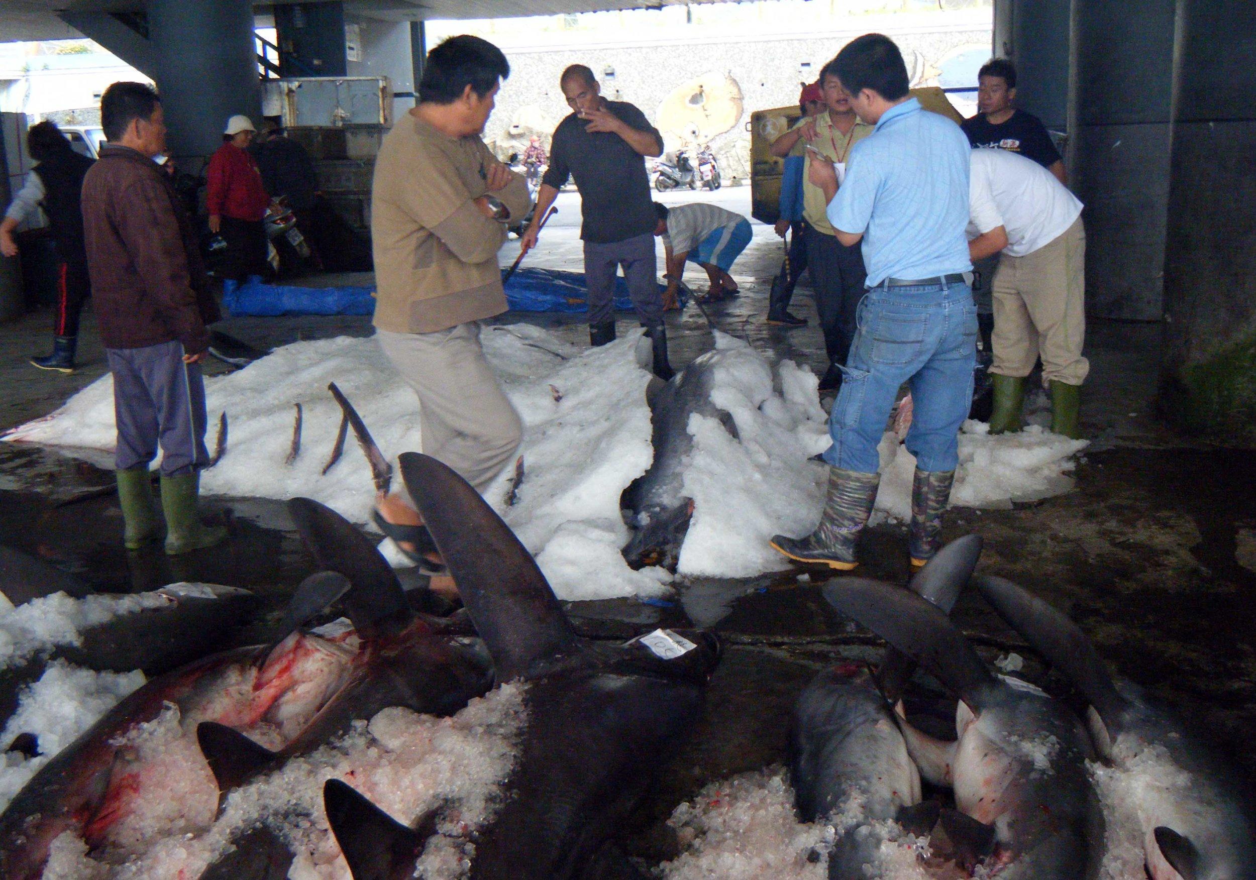 Chengkung shark auction.jpg