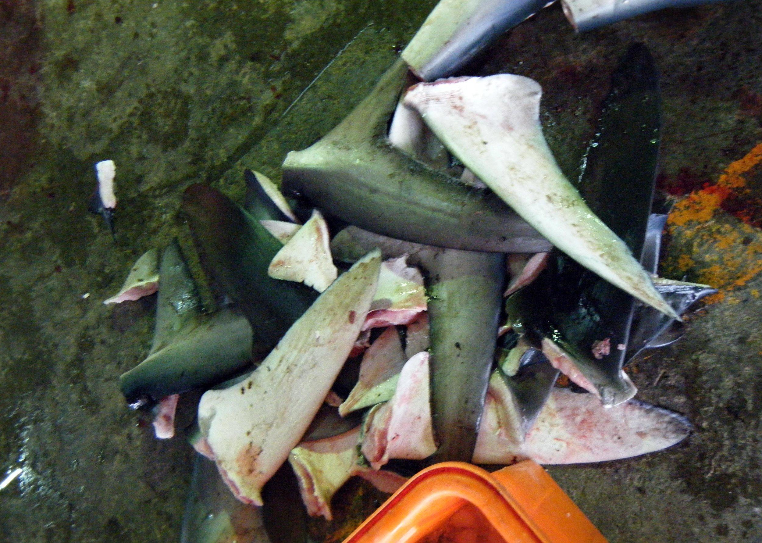 shark fins.jpg