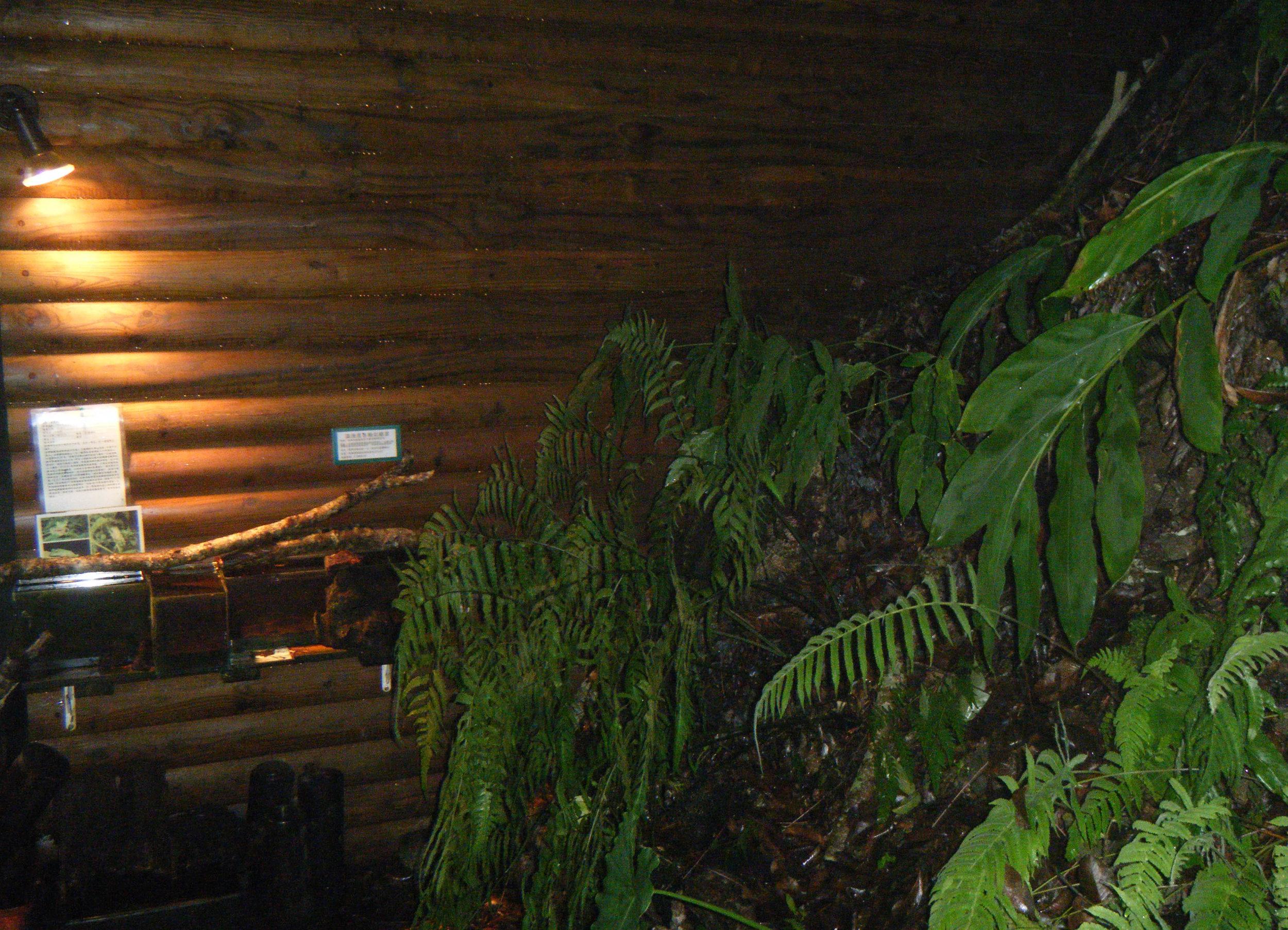 indoor beetle farm.jpg