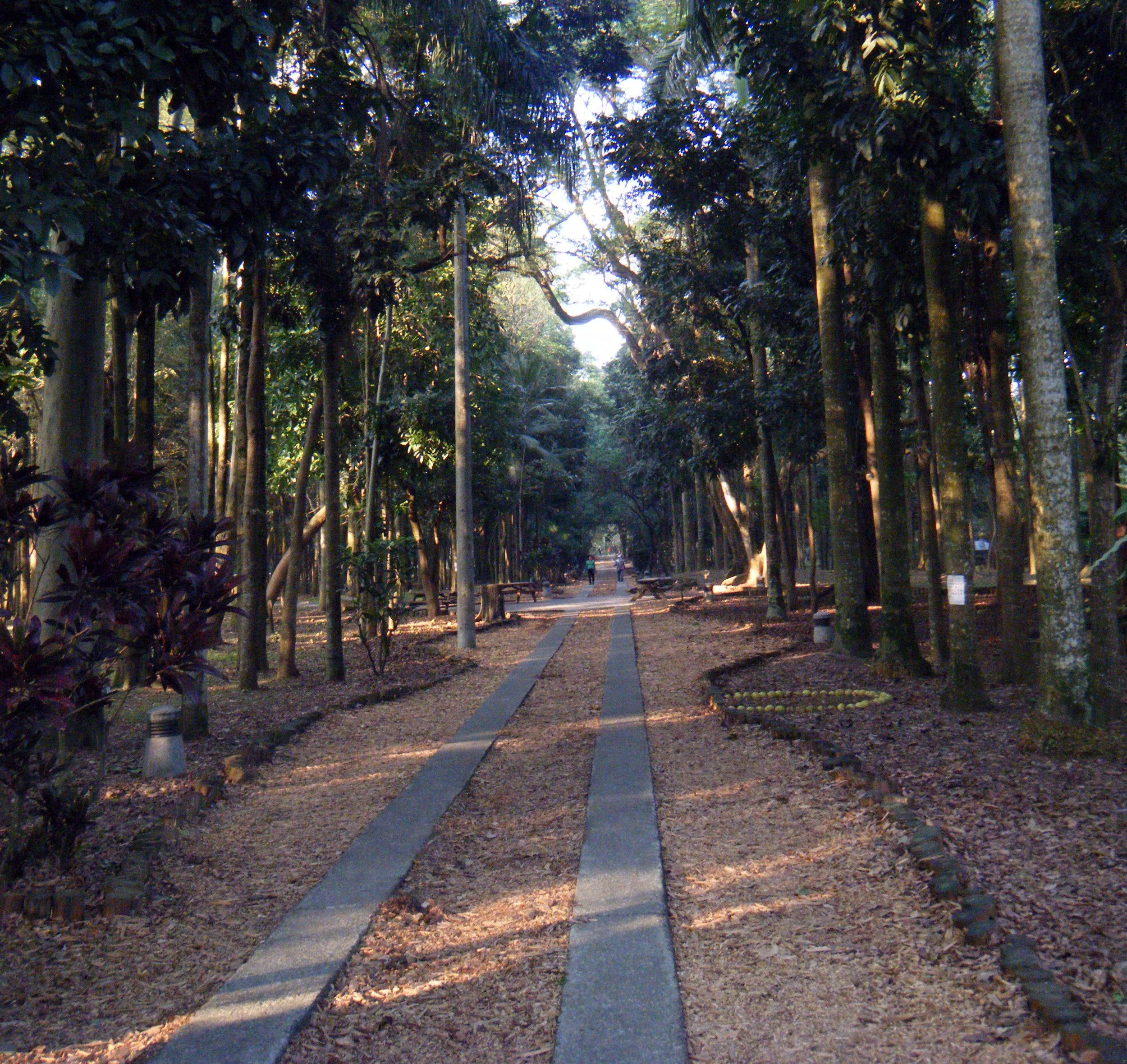 NTU forest.jpg