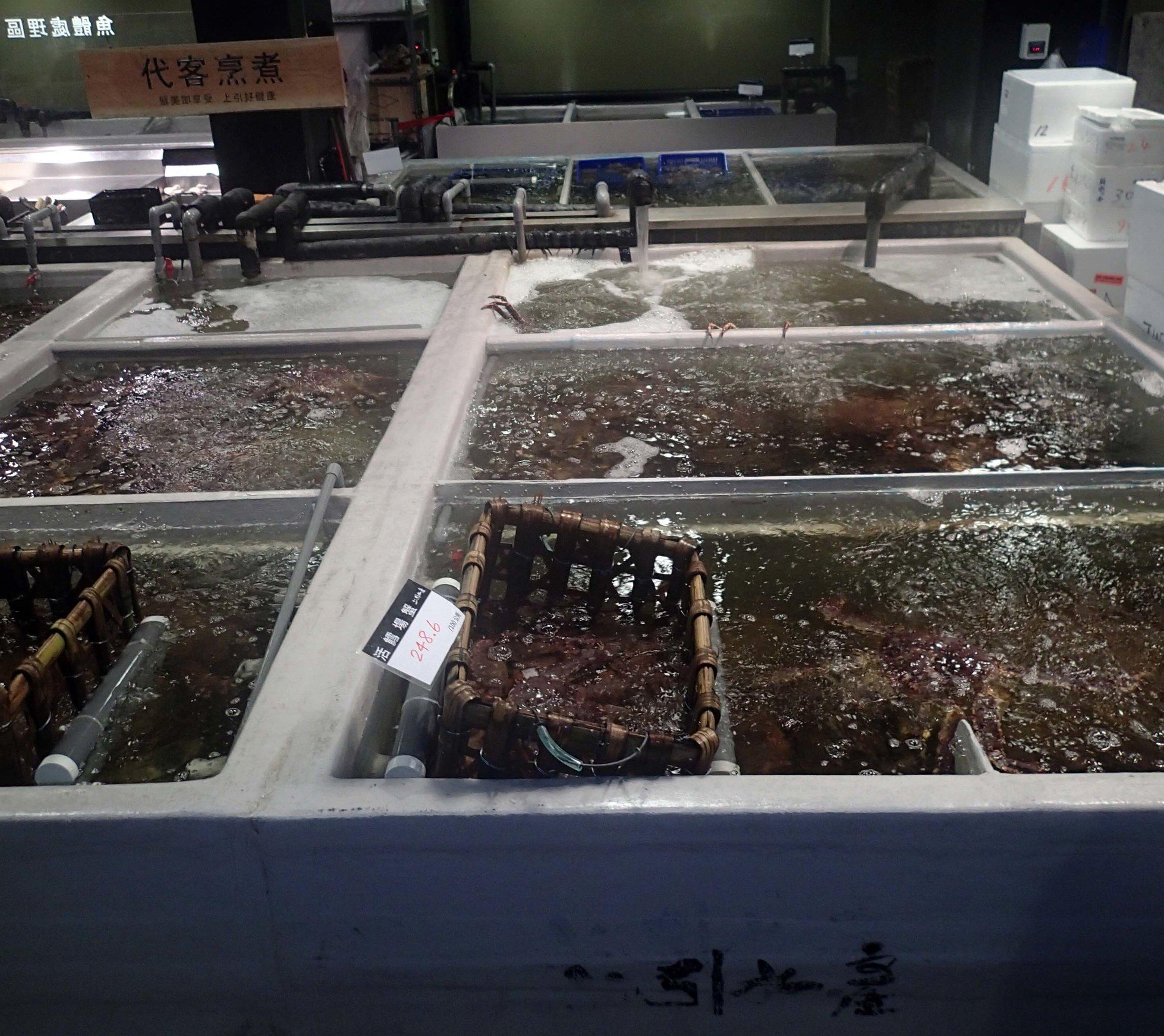 monster crab tanks.jpg