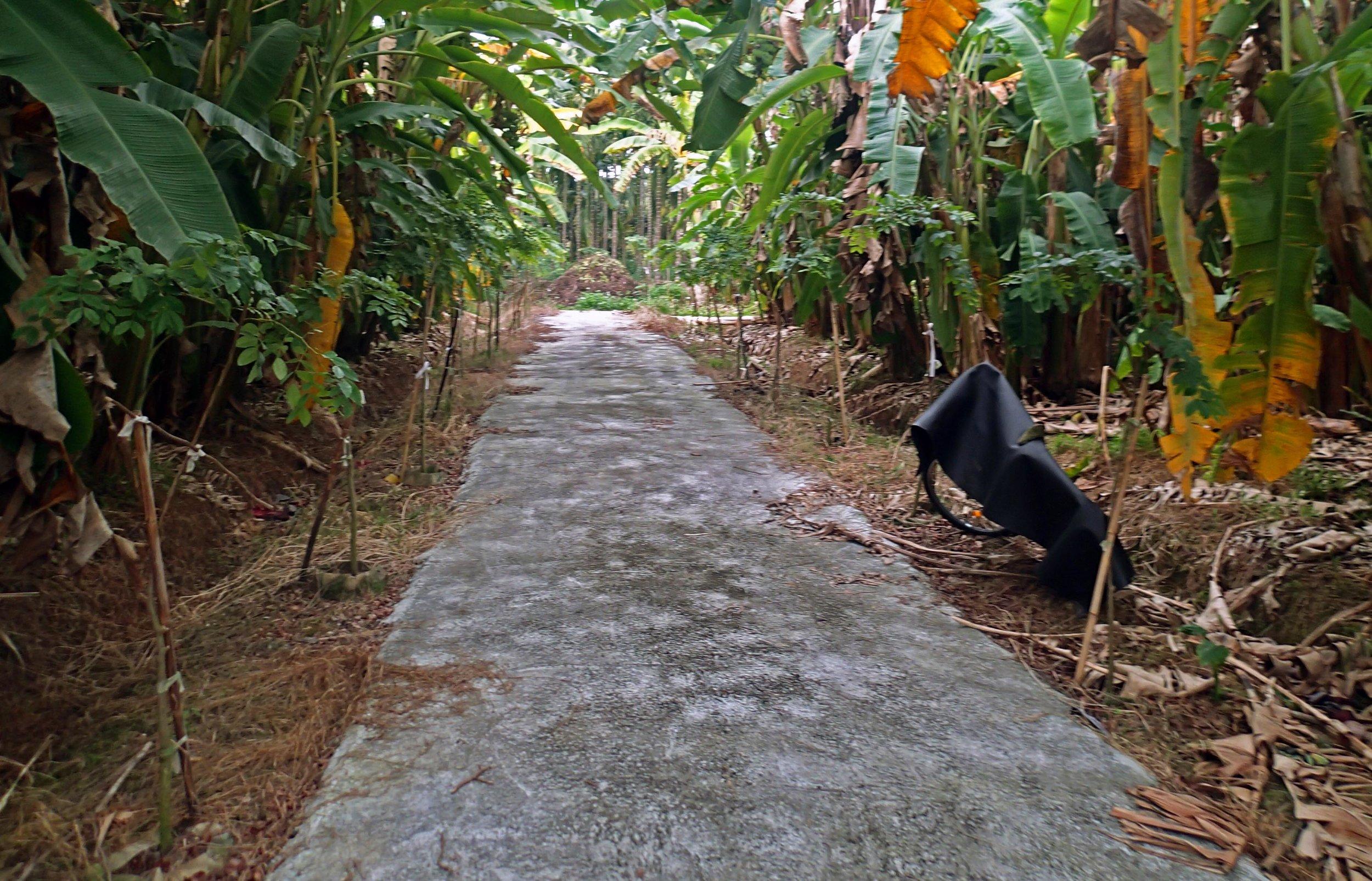 banana alley.jpg
