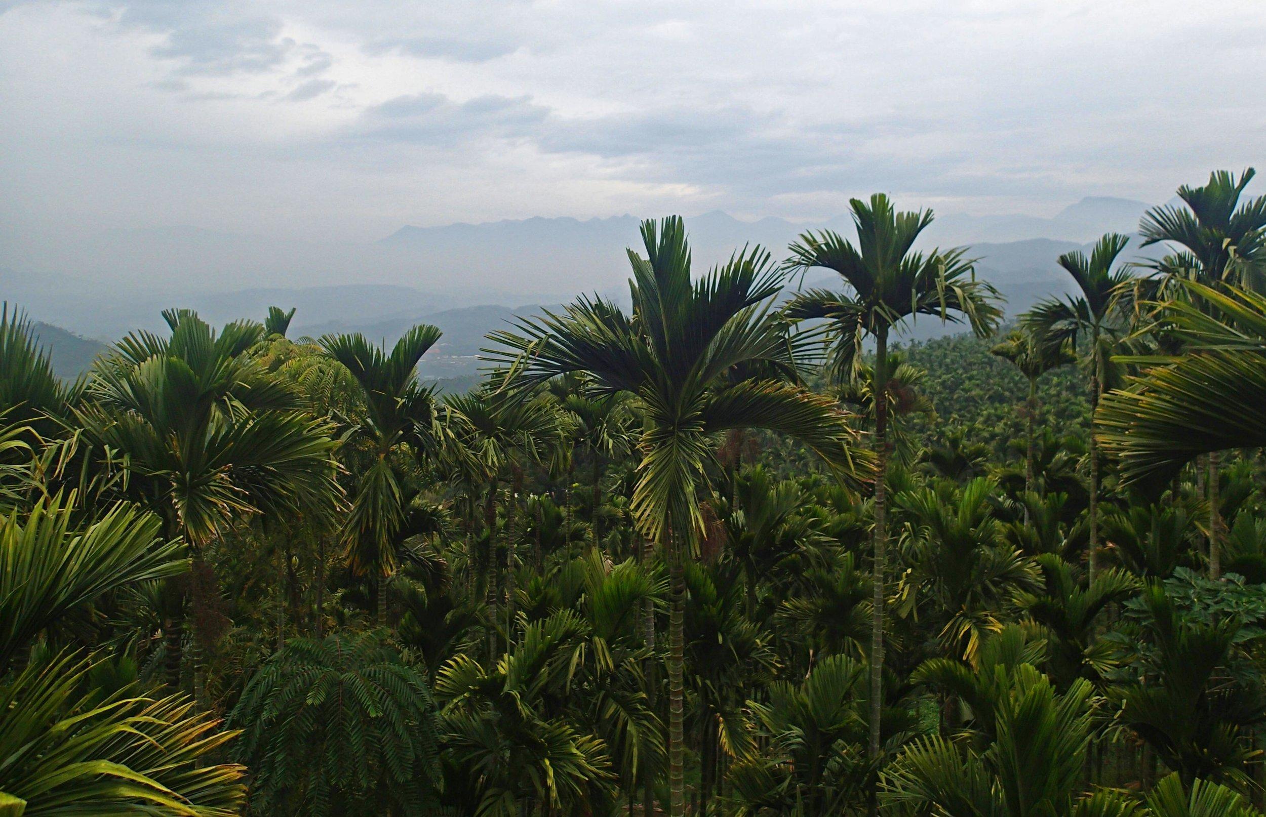 gorgeous betelnut views.jpg