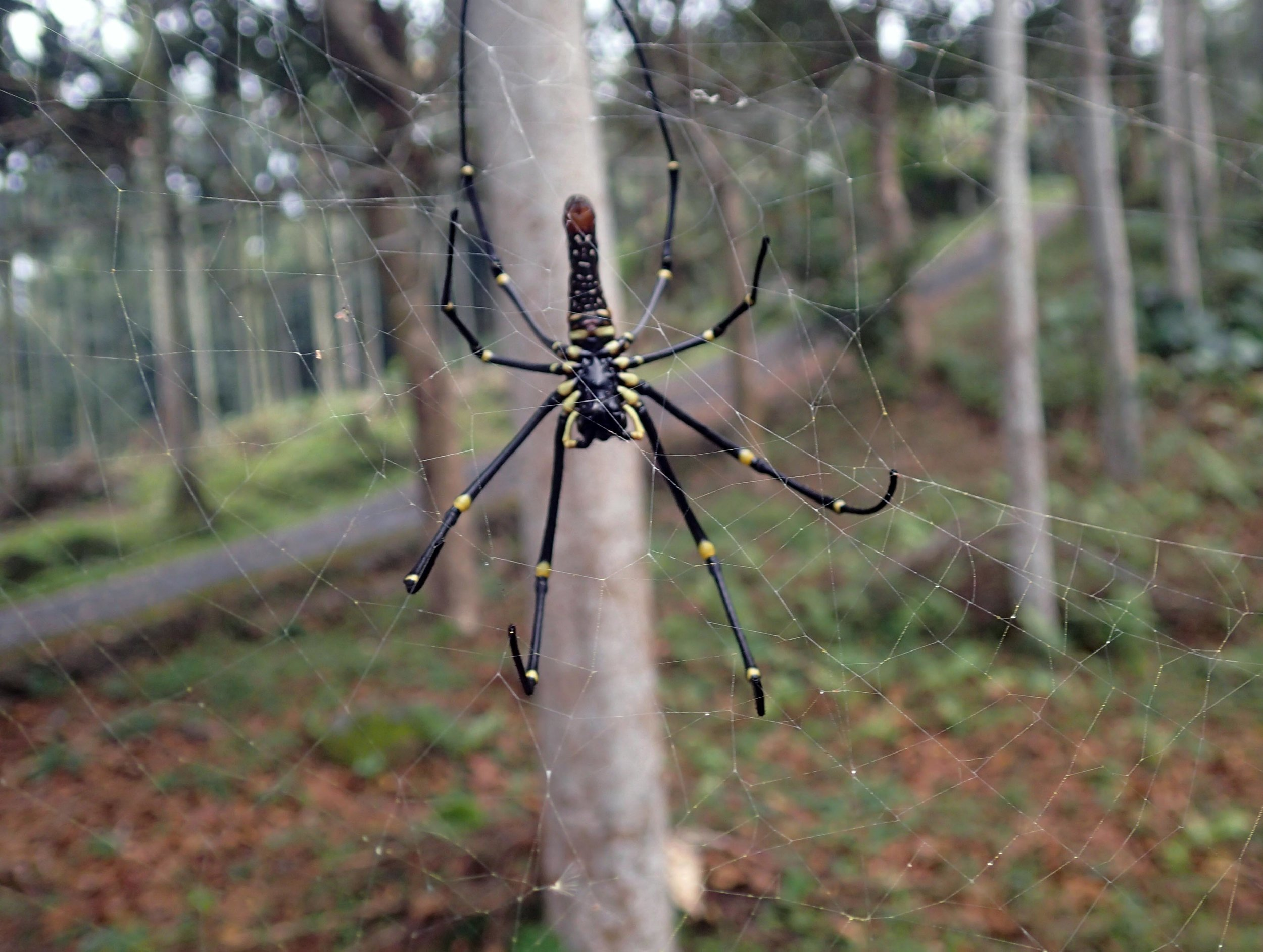 huge spider.jpg