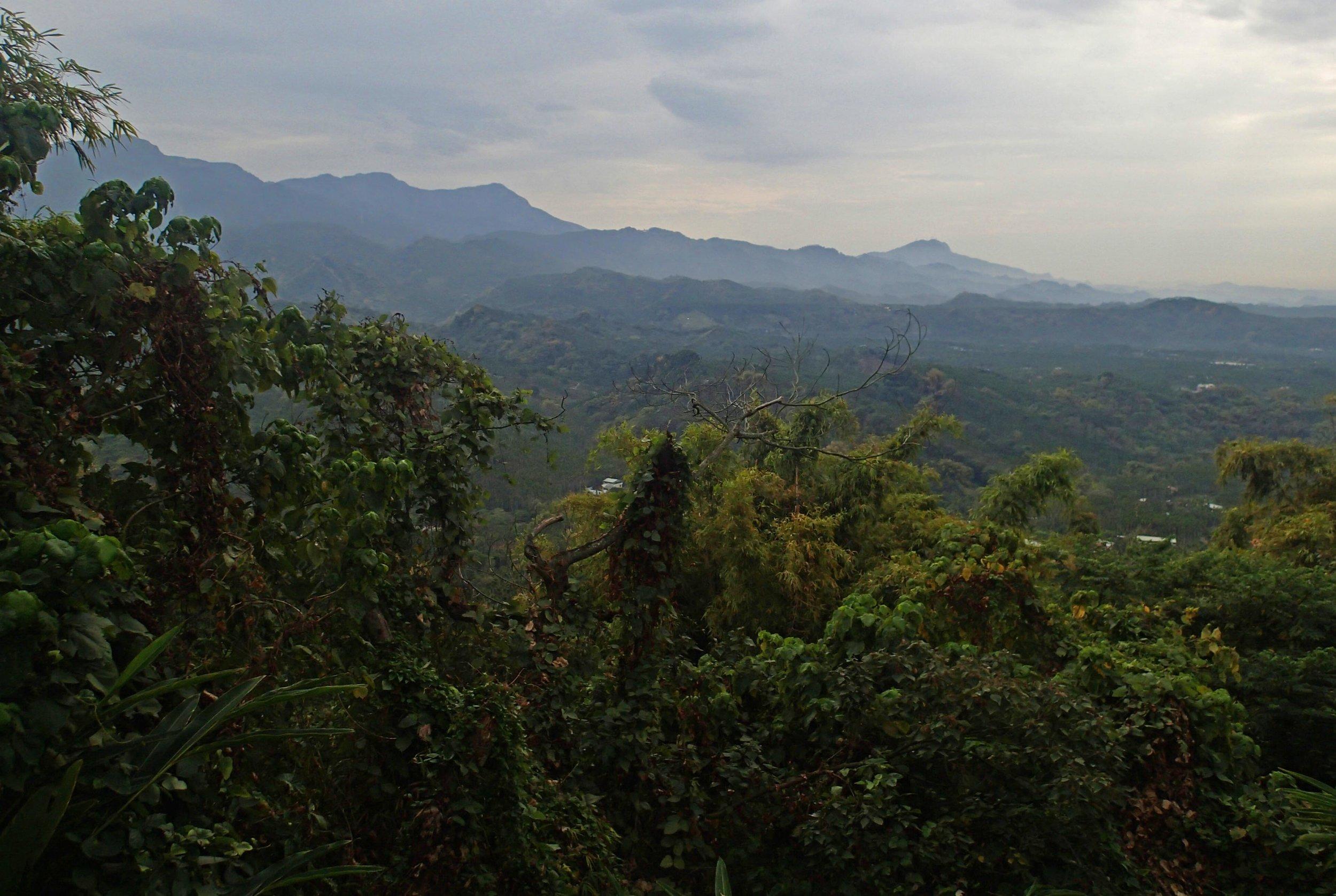 lush mountains of Taiwan.jpg