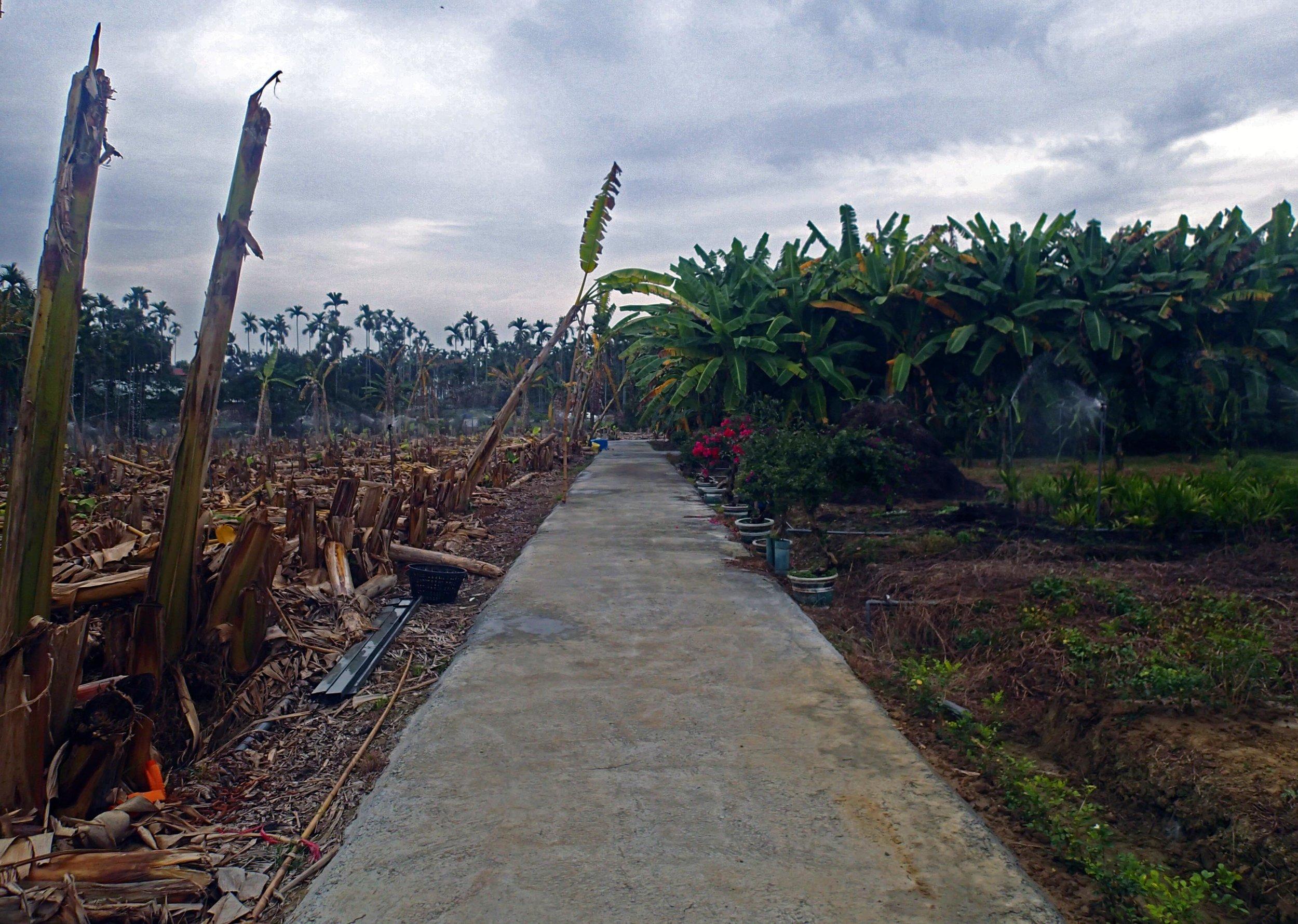 Tsai family farm.jpg