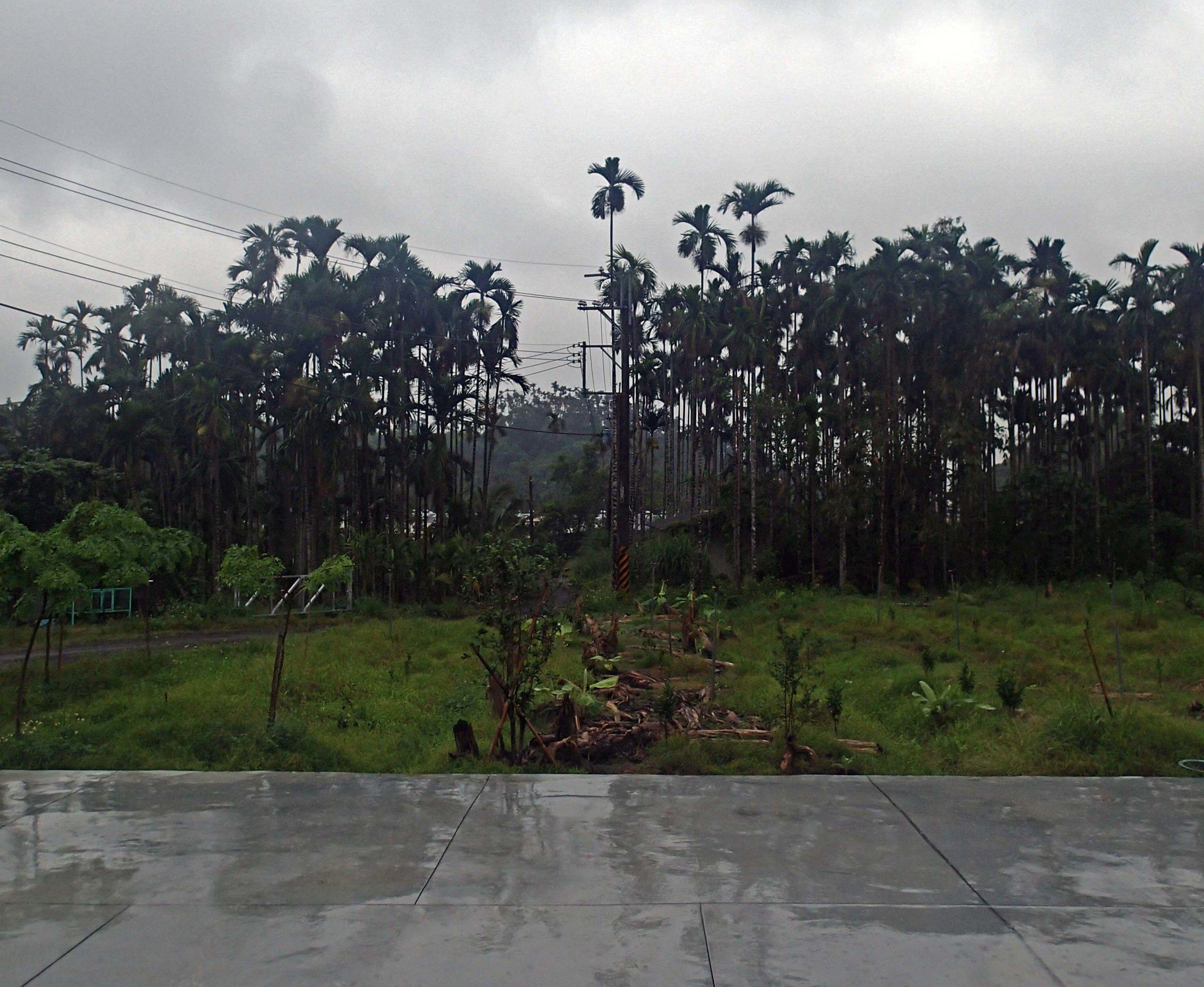 pre-typhoon rains.jpg