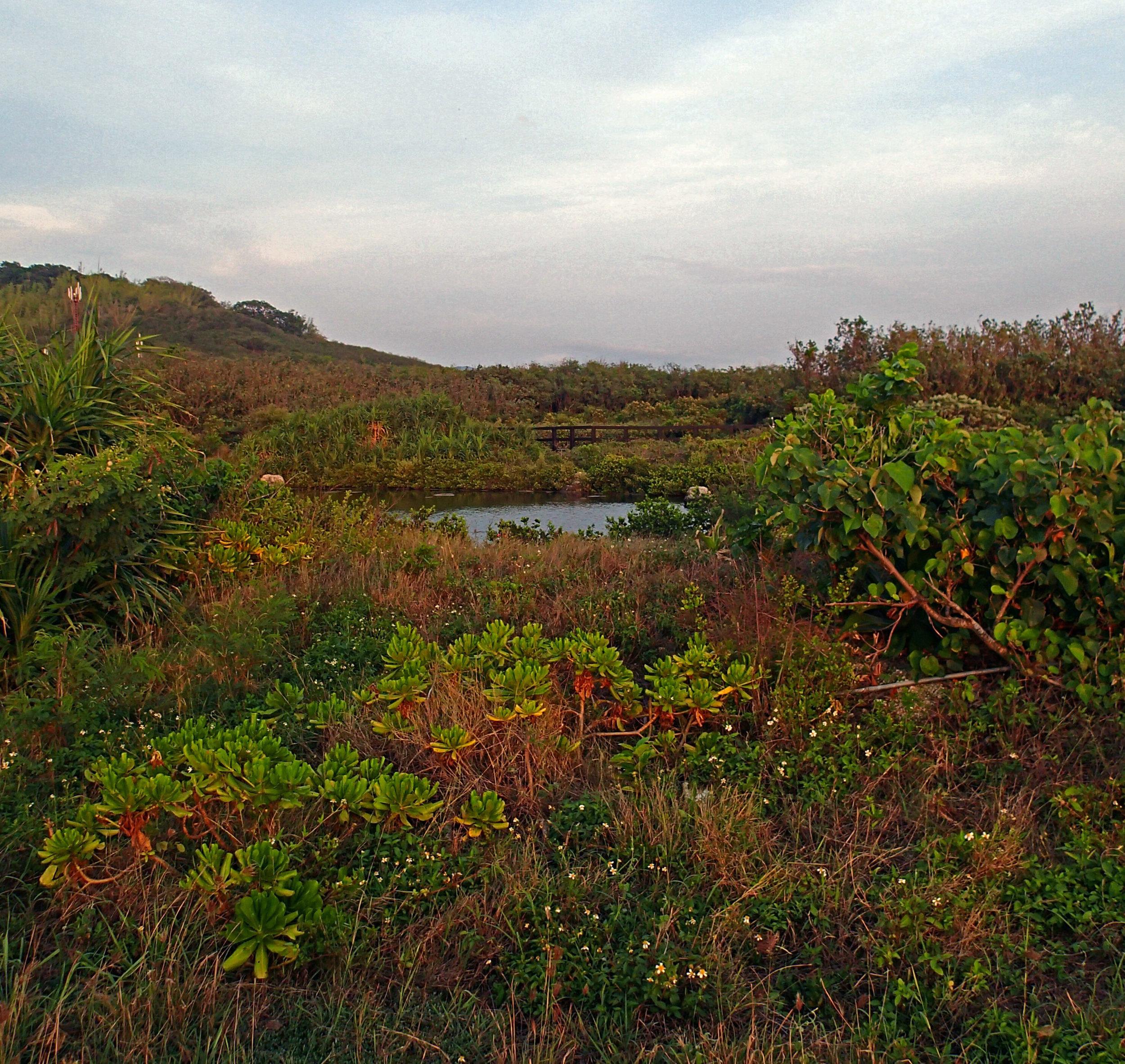 wetland at NMMBA.jpg