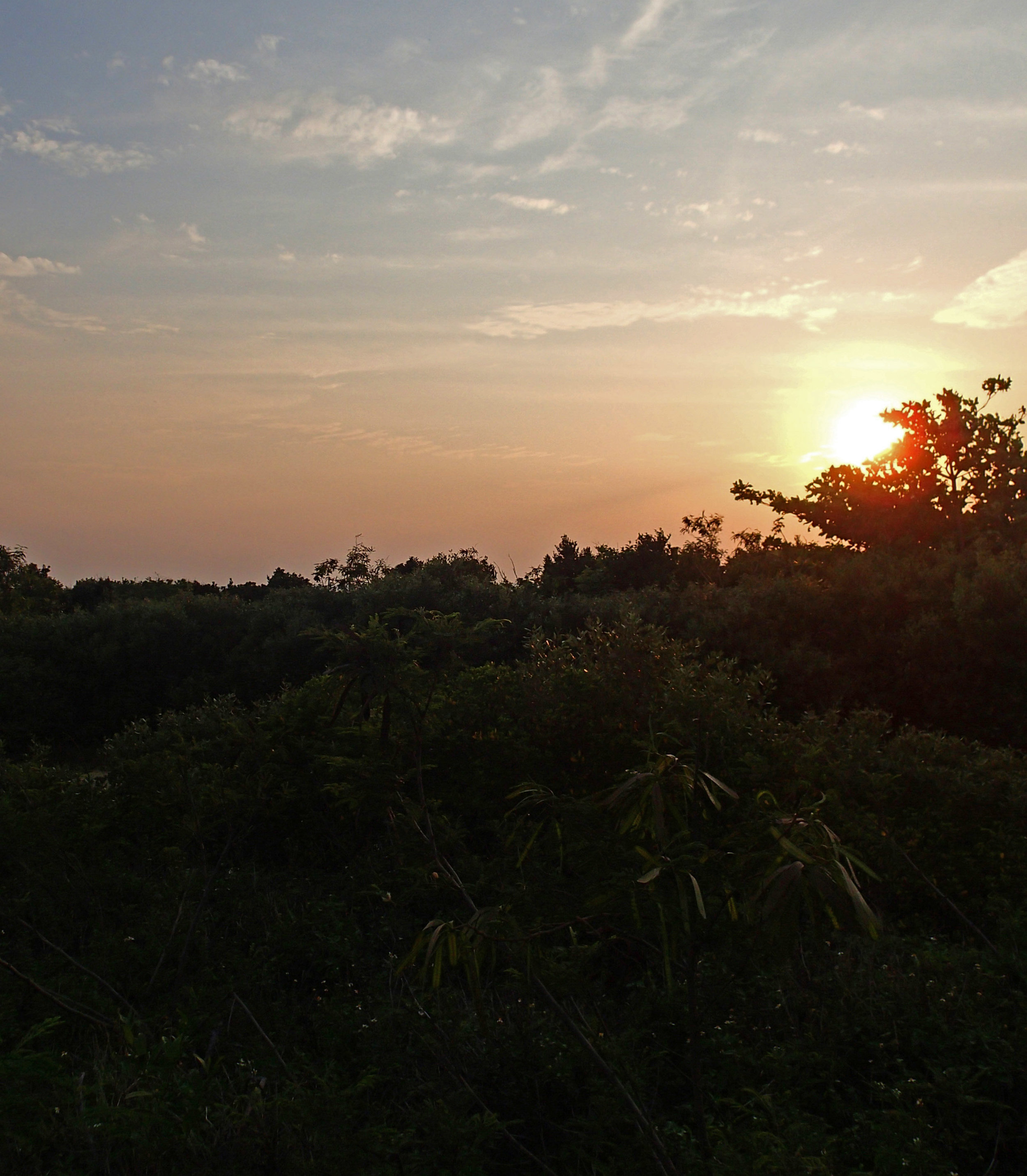 sunset at the artificial wetland.jpg