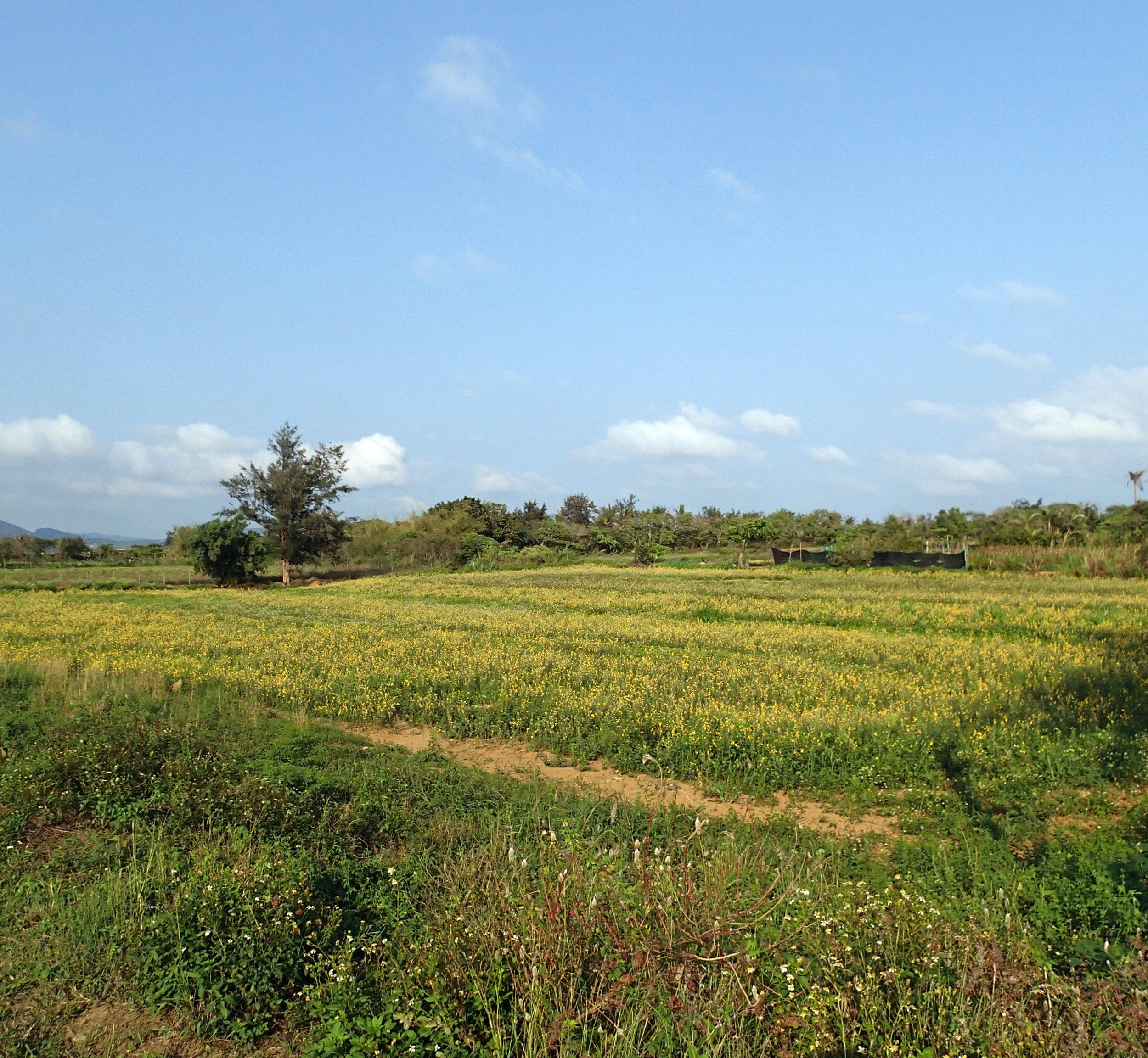 near Daguang.jpg
