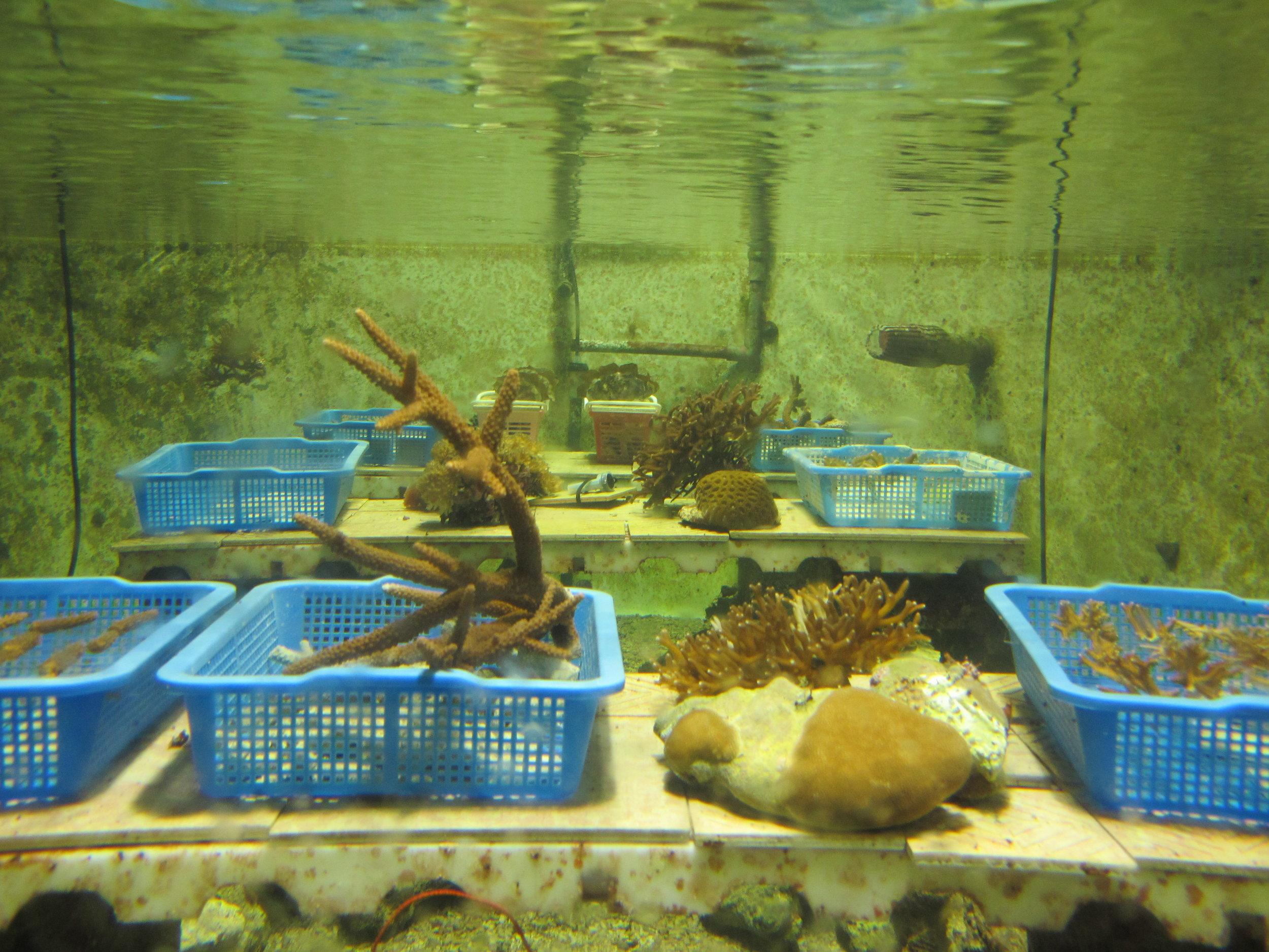 underwater mesocosm.jpg
