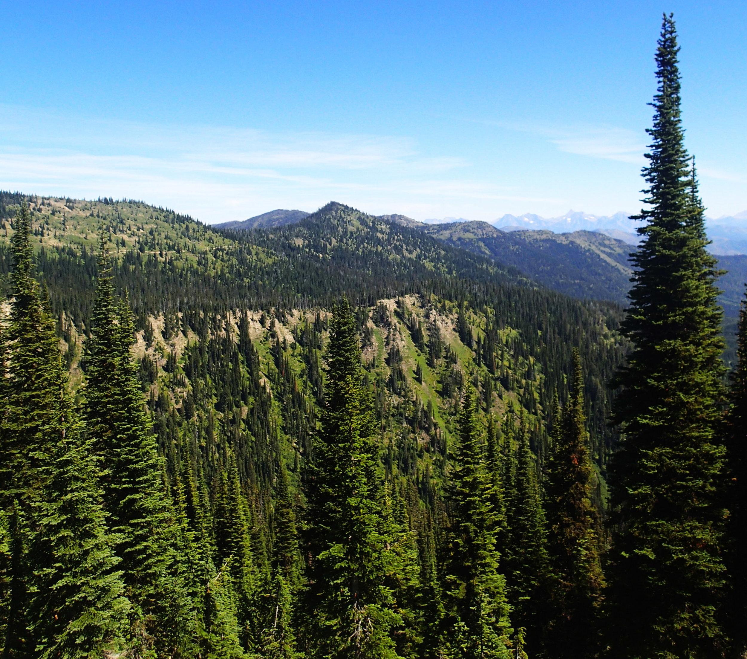 alpine forests.jpg