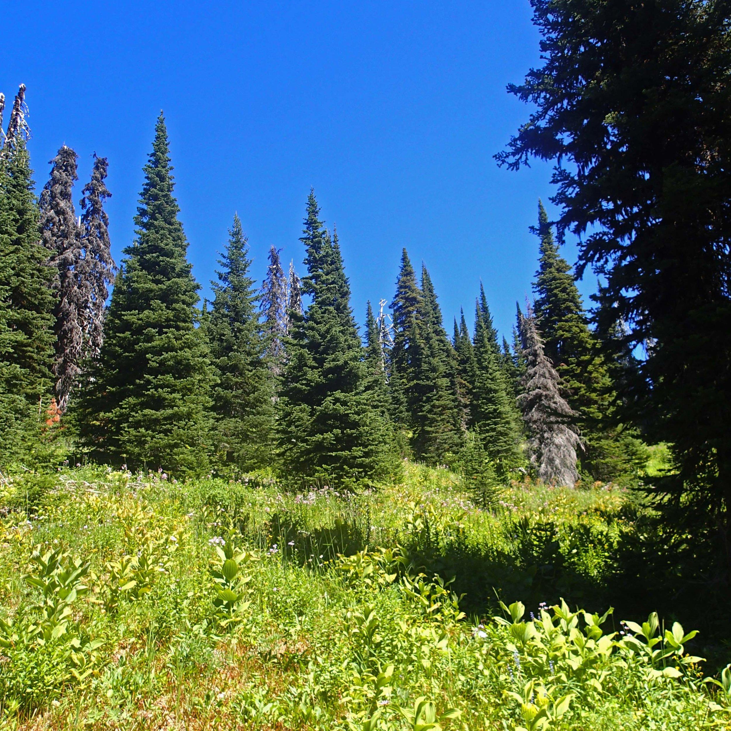 Whitefish Mountains 8-20-16.jpg