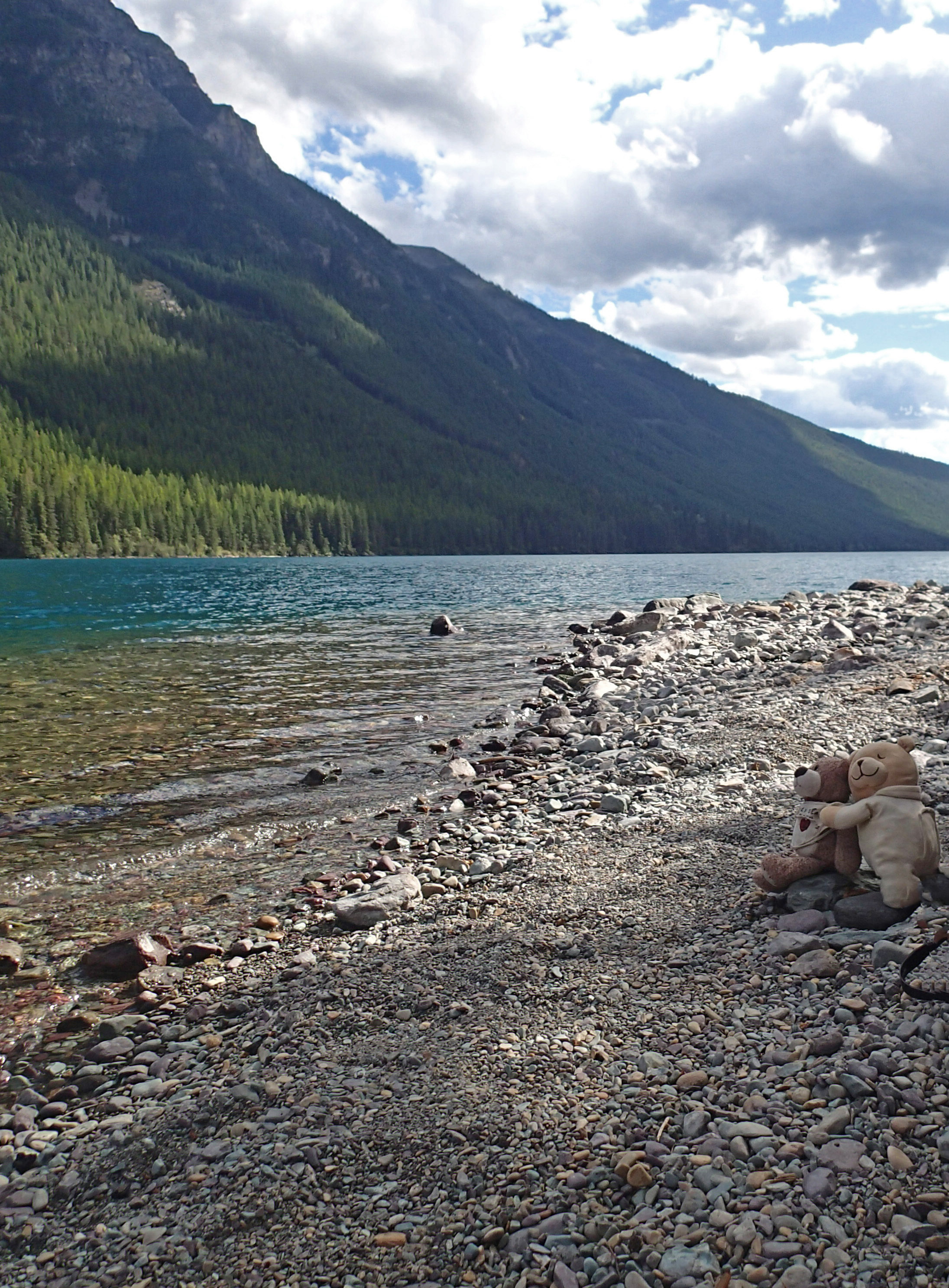Bearbies at Bowman Lake.jpg