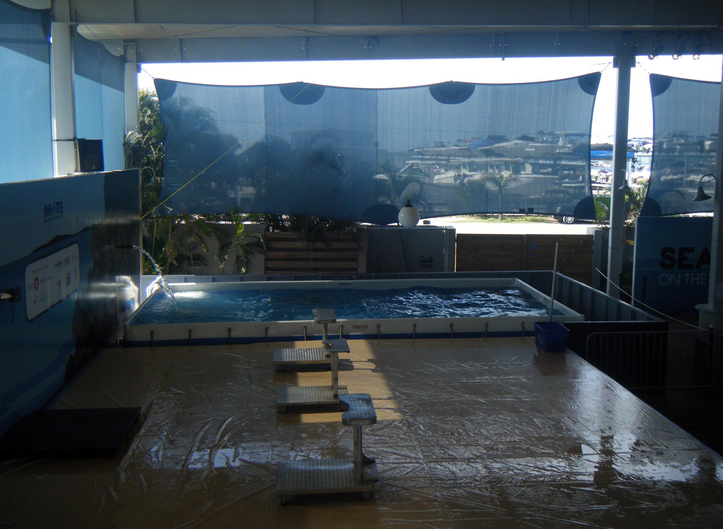 Mote Aquarium 3-11-13.jpg