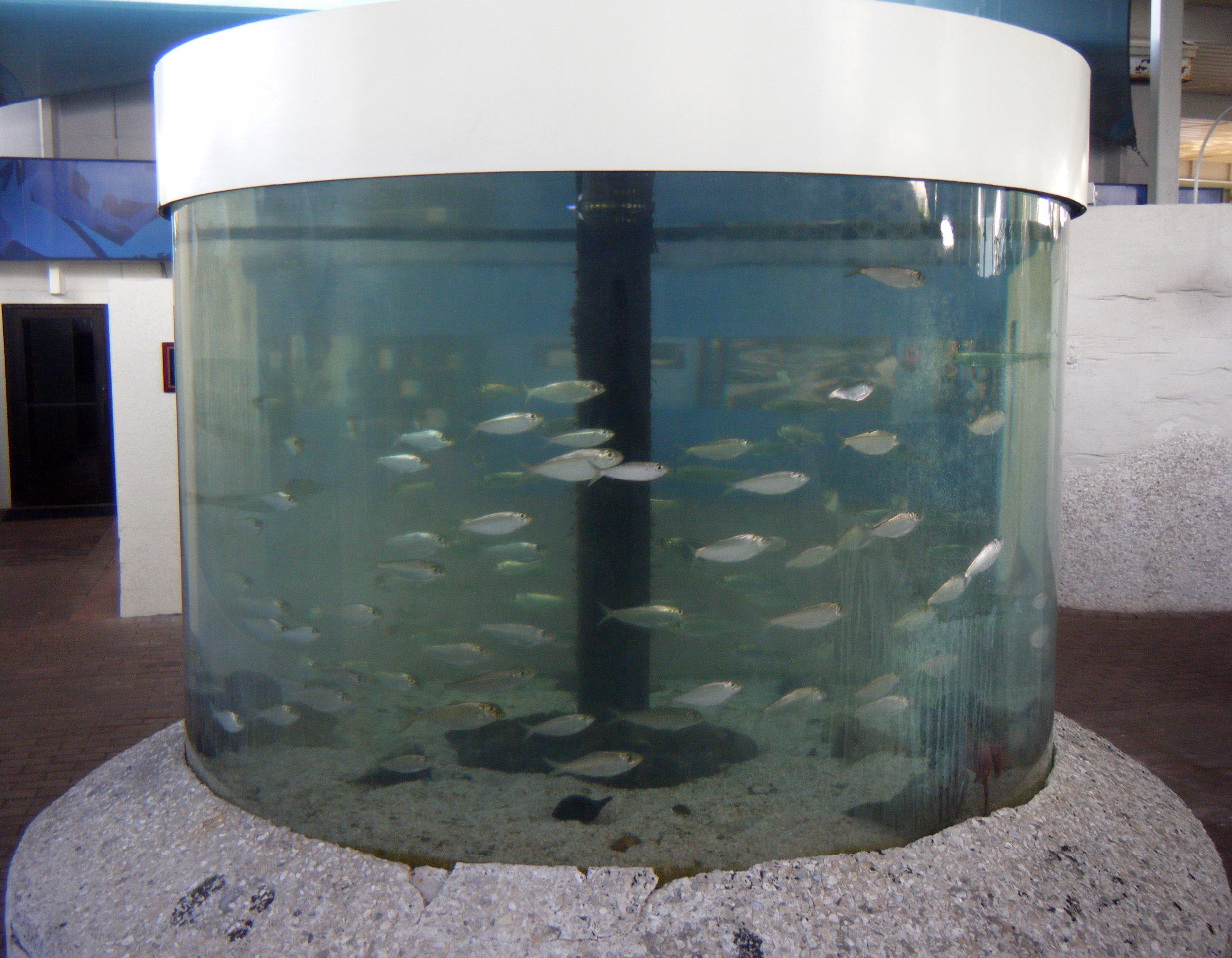 Mote Aquarium.jpg