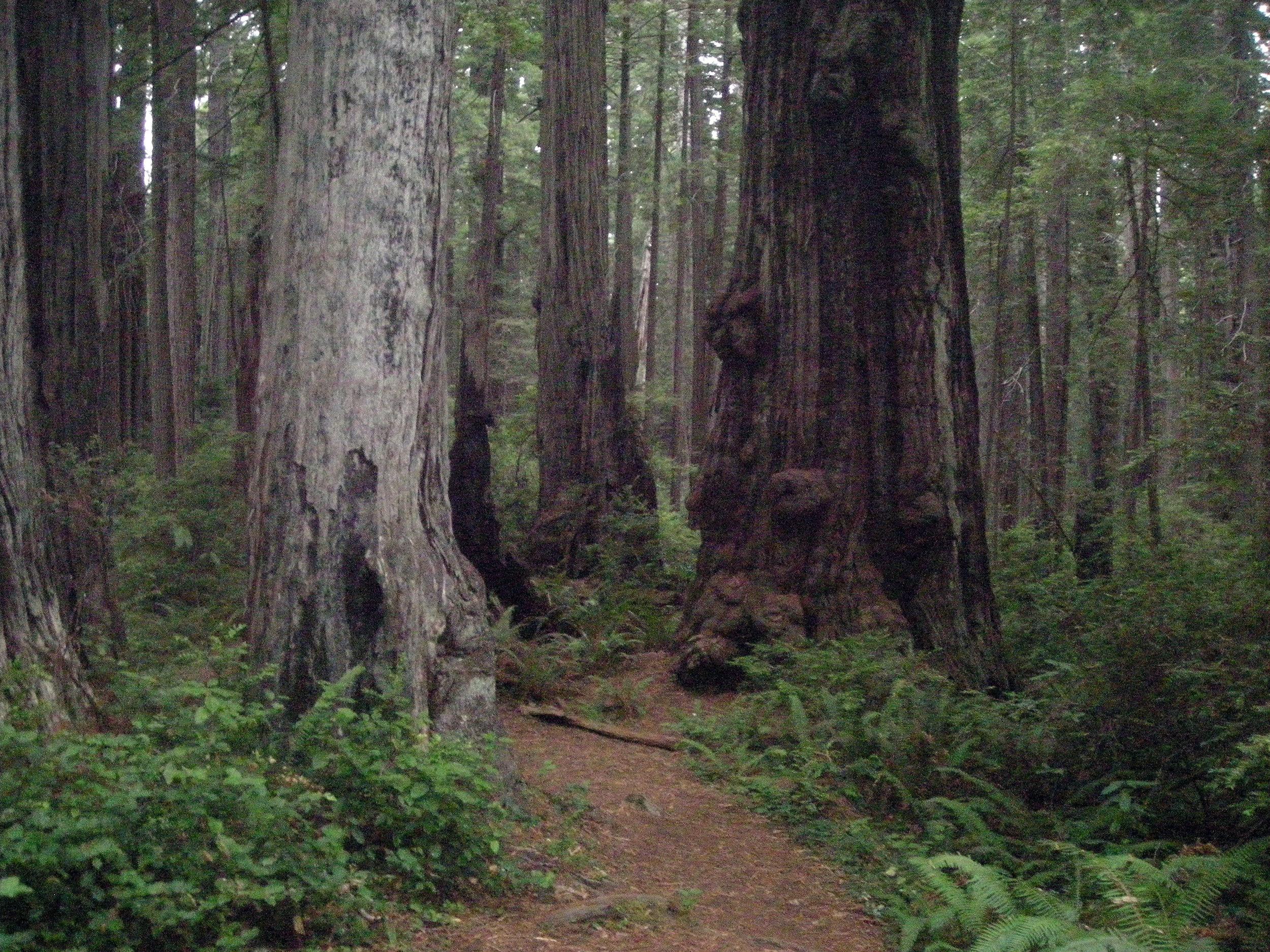 Prairie Creek Redwoods SP.jpg