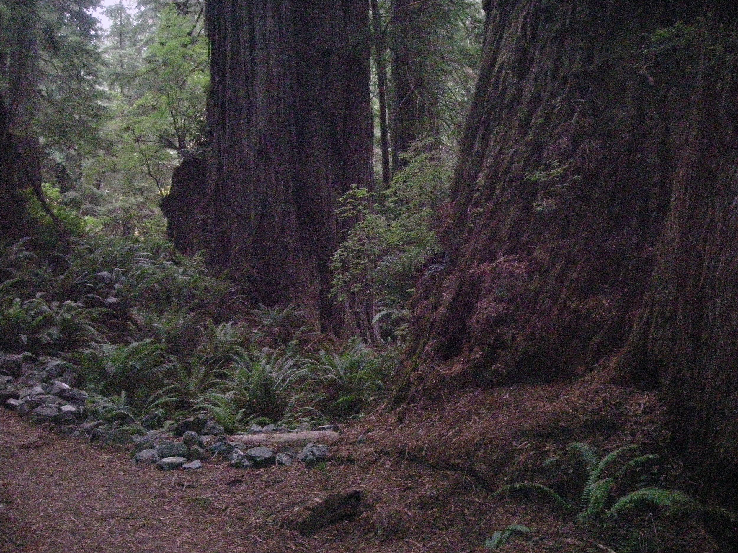 Redwoods National Park.jpg