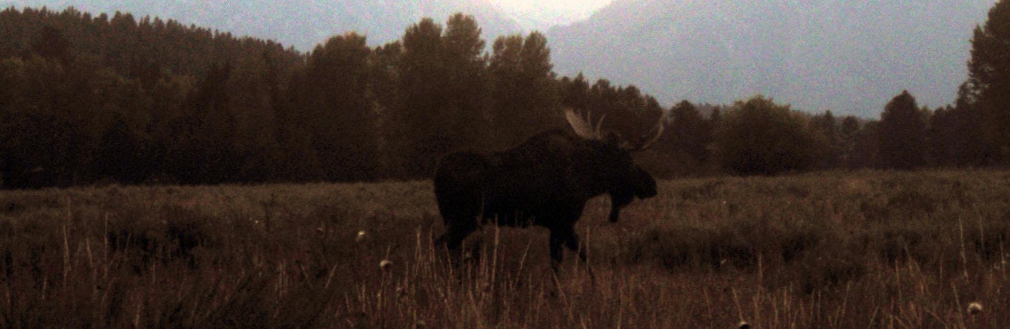 artsy moose.jpg