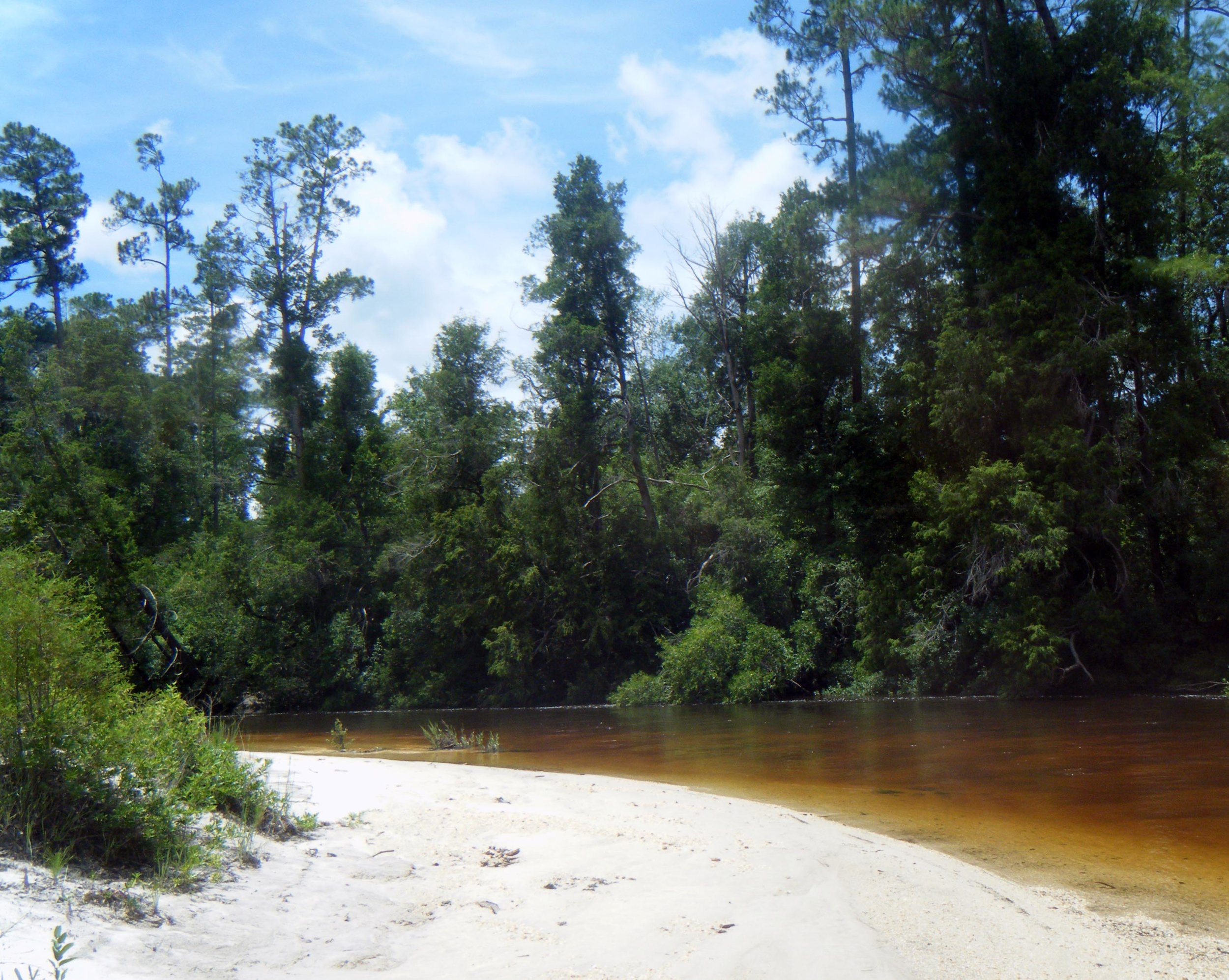 Blackwater river tubing.jpg