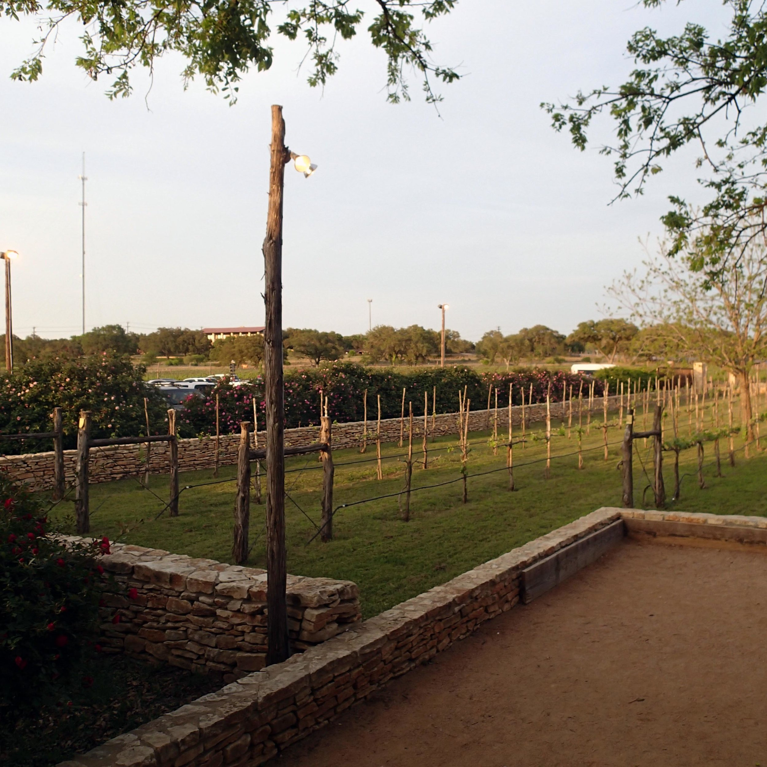 Salt Lick vineyard.jpg