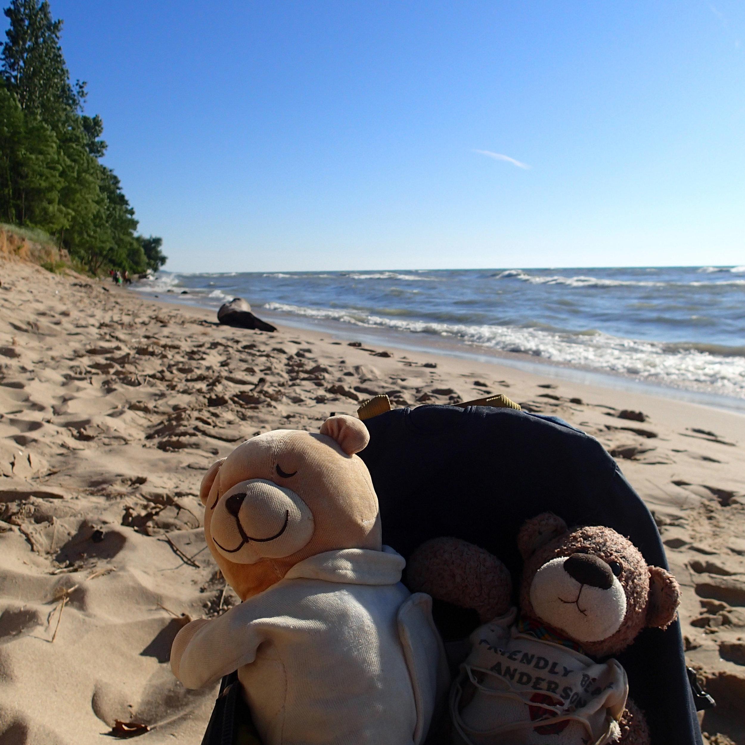 bearbies at Hager Beach.jpg