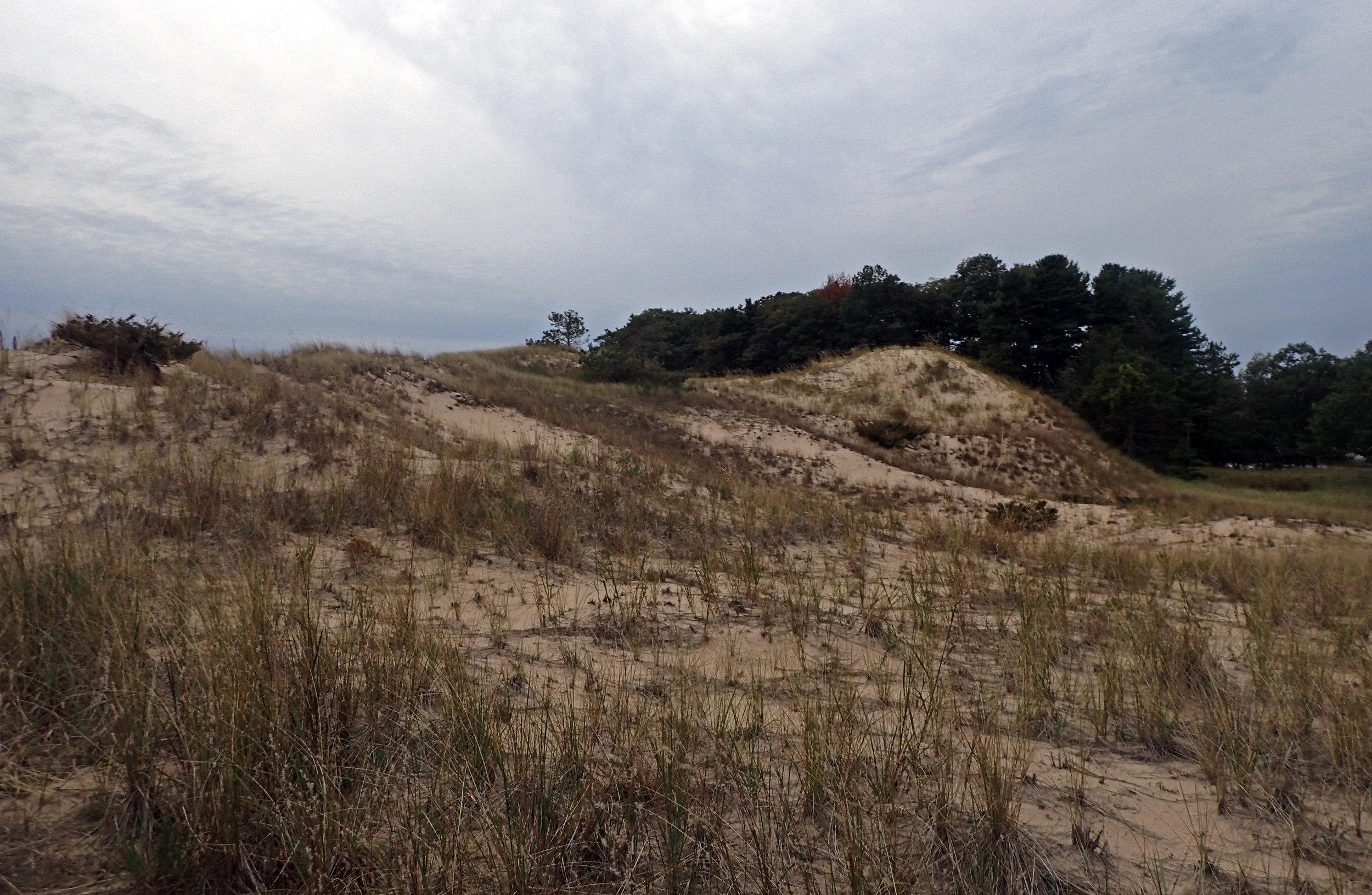 Ludington dunes.jpg