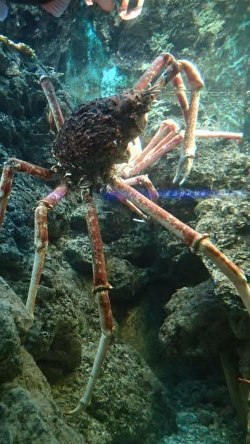 monster crab.jpg