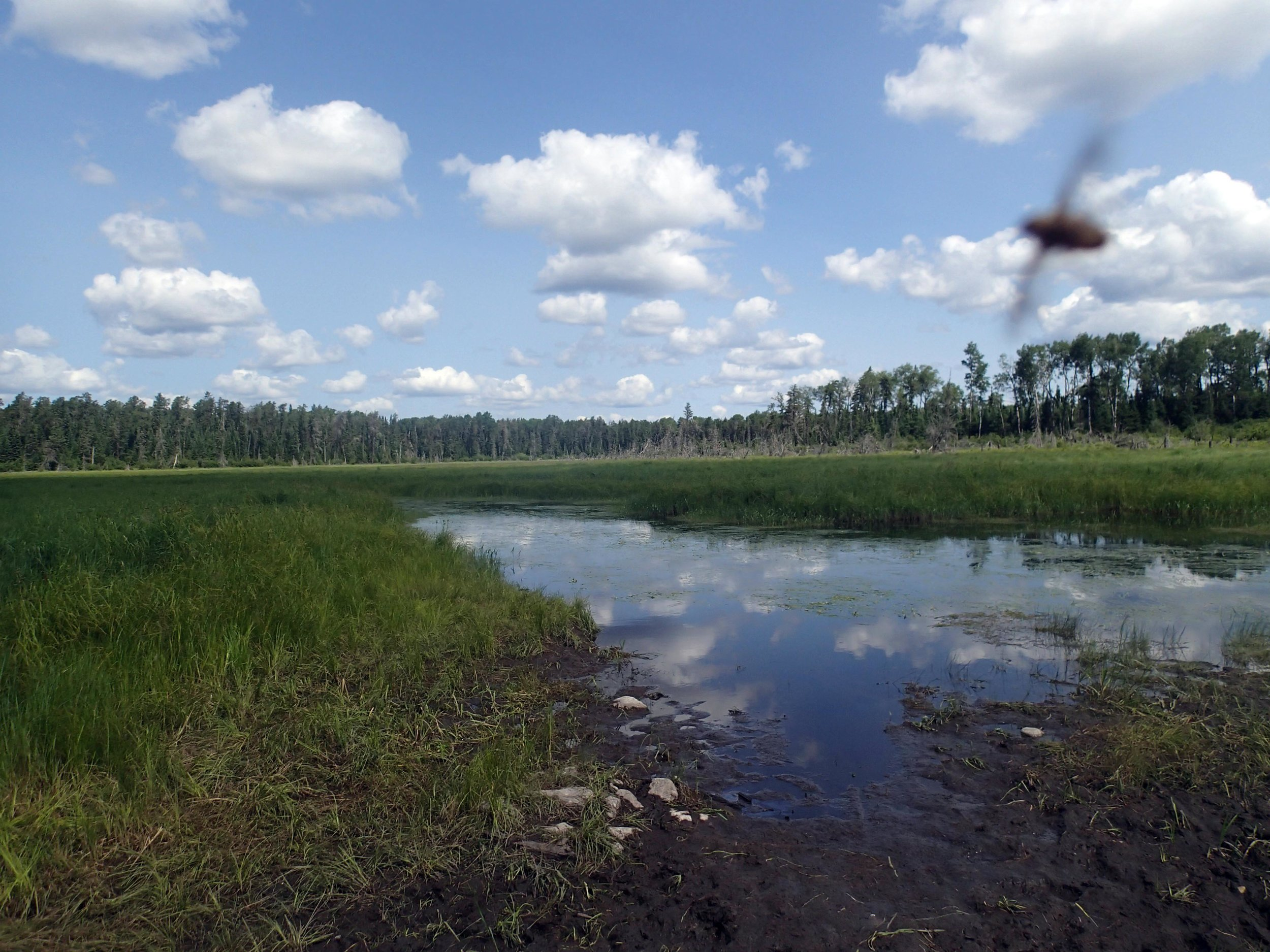 Stuart River and mosquito.jpg