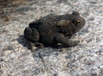 frog macro better.jpg