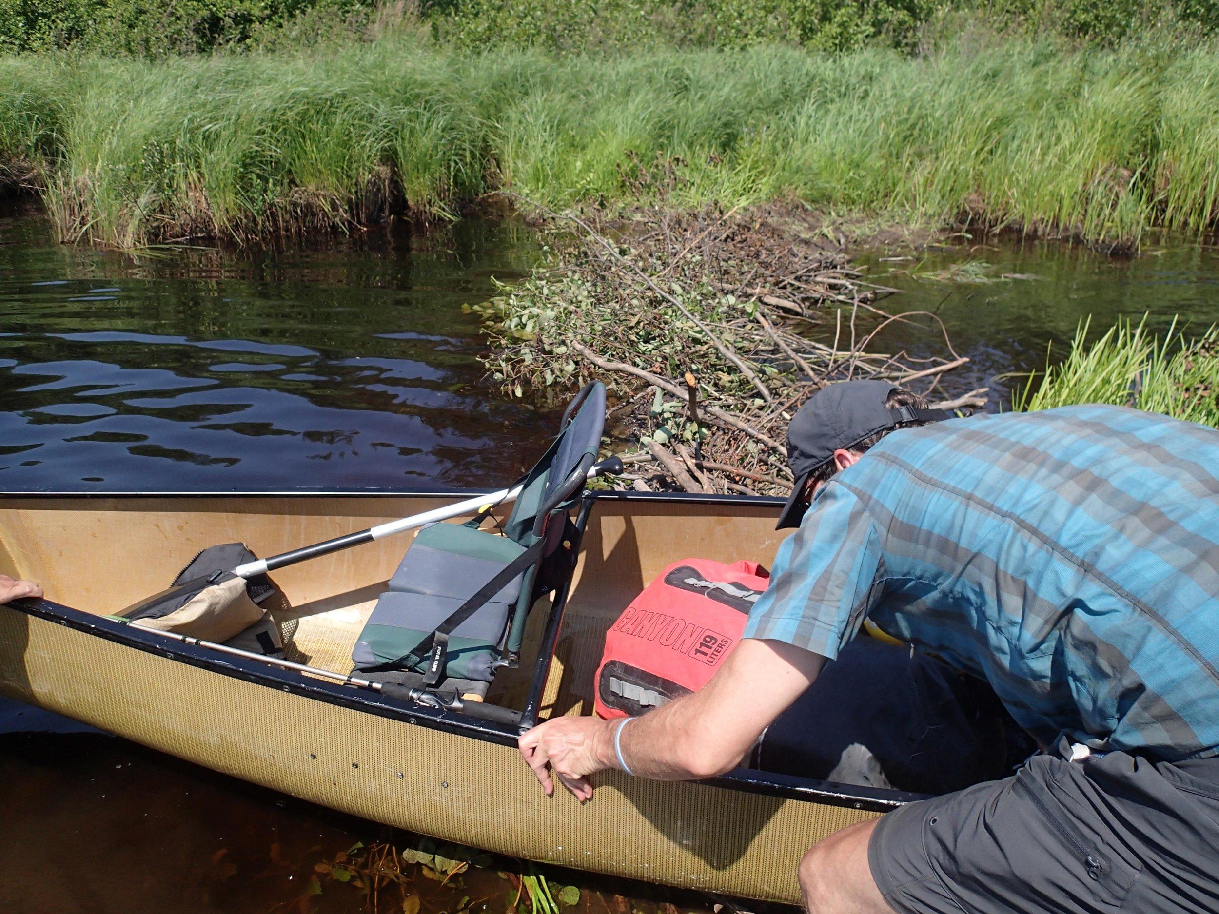 crossing a beaver dam.jpg
