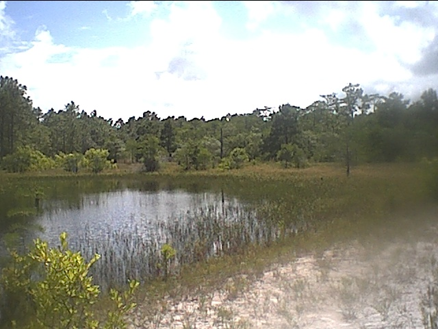carolina beach state park cypress pond.JPG