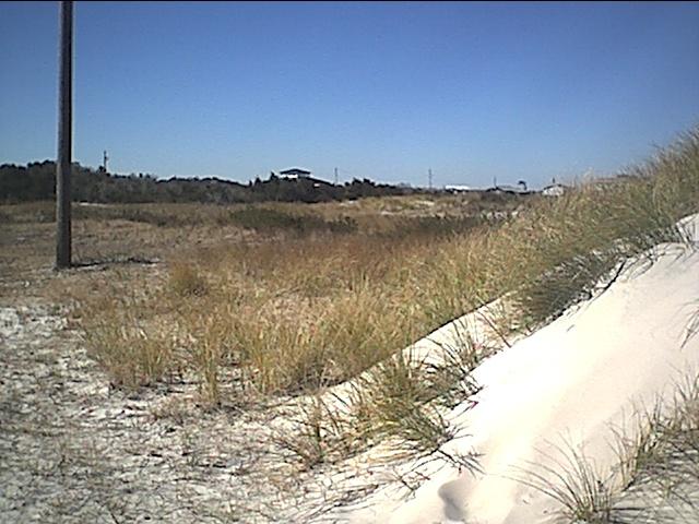 cedar island dunes.JPG