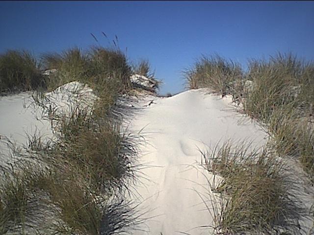 cedar island sand dune.JPG