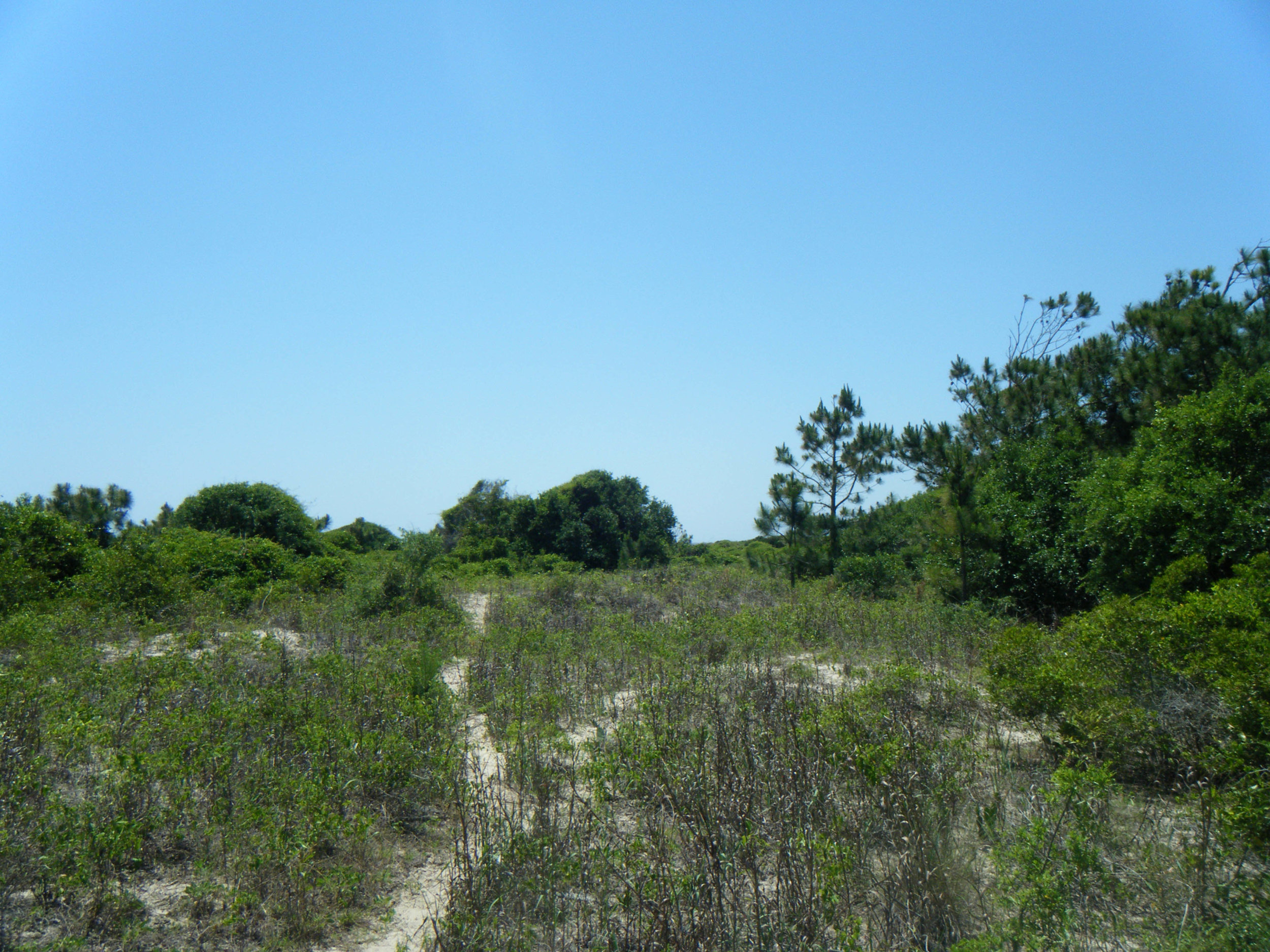 South Carolina dunes.jpg