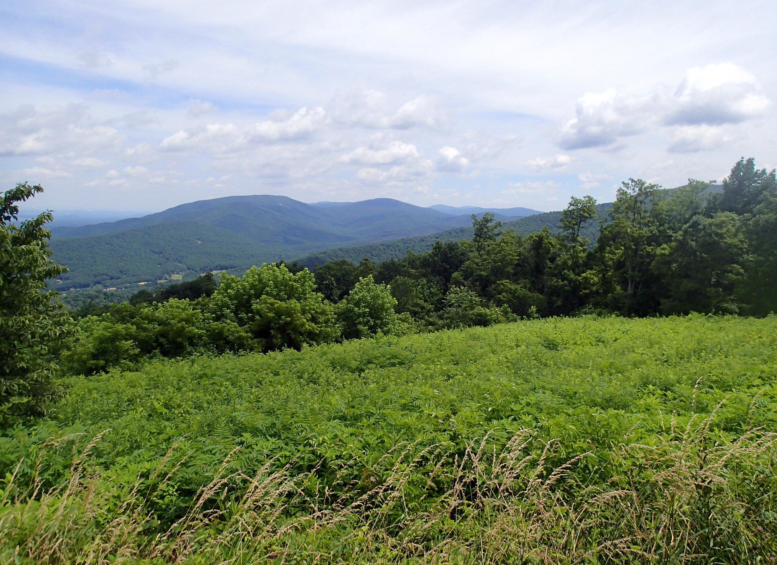 view from Skyline Dr.jpg