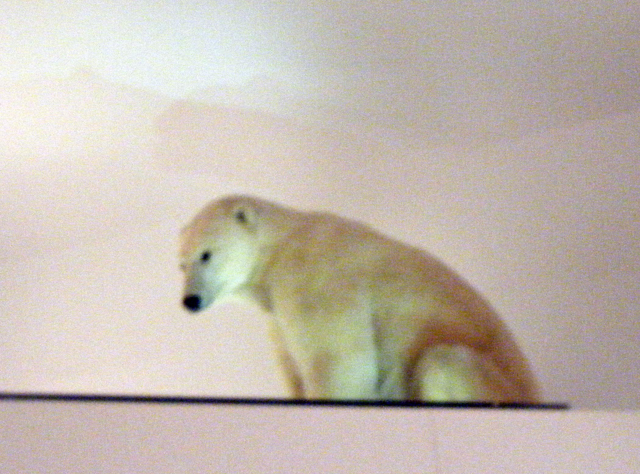 polar bear at Smithsonian.jpg