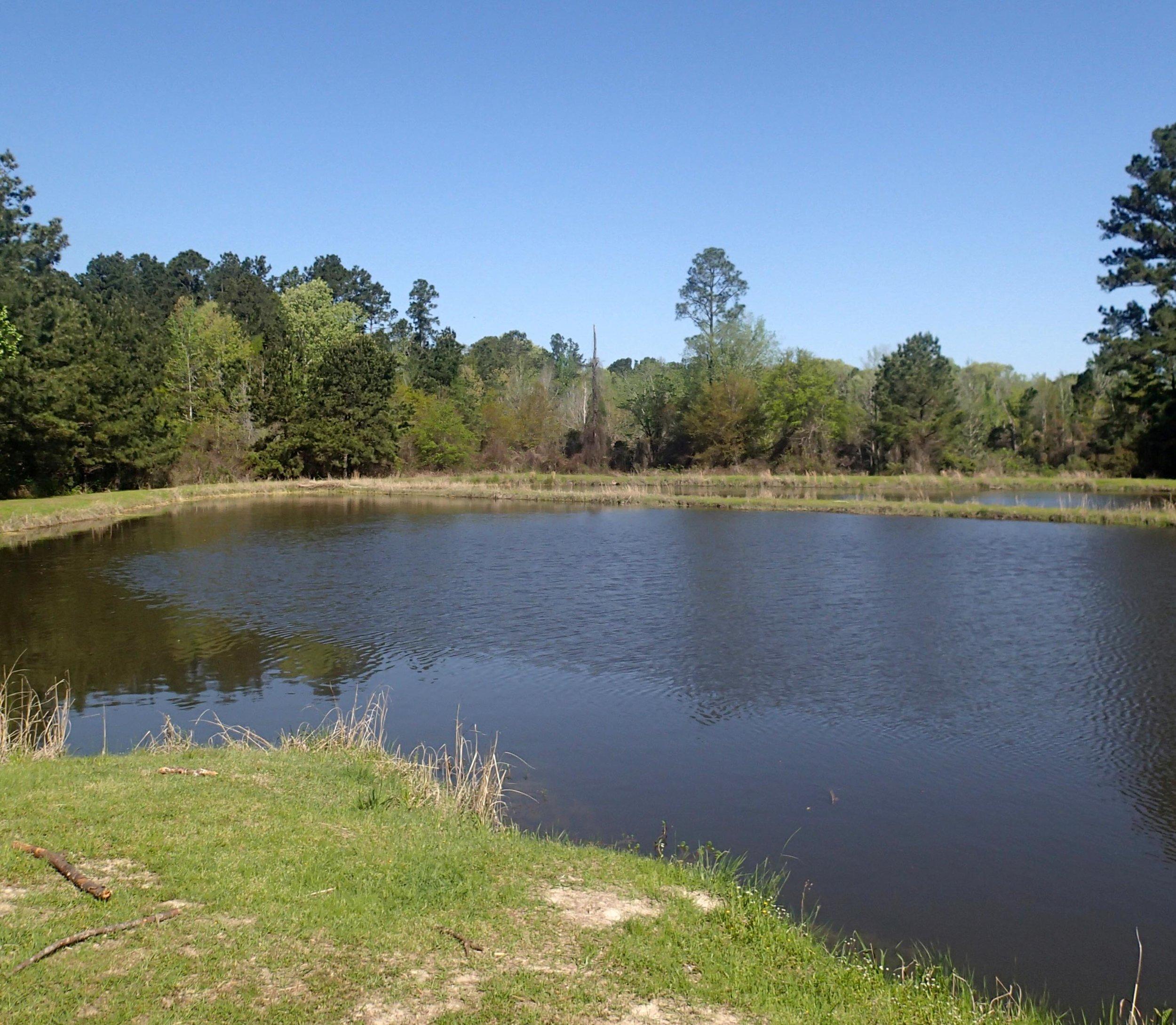 4-10-2014 Anderson Pond.jpg