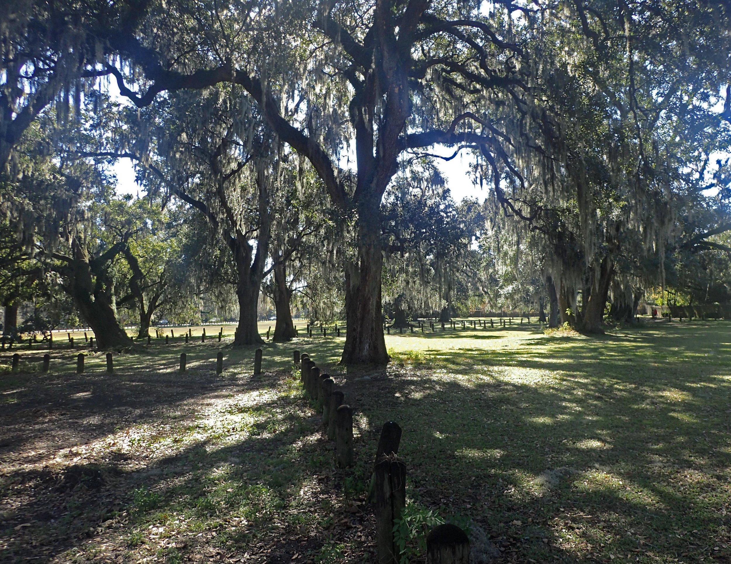 Audubon Park NOLA.jpg