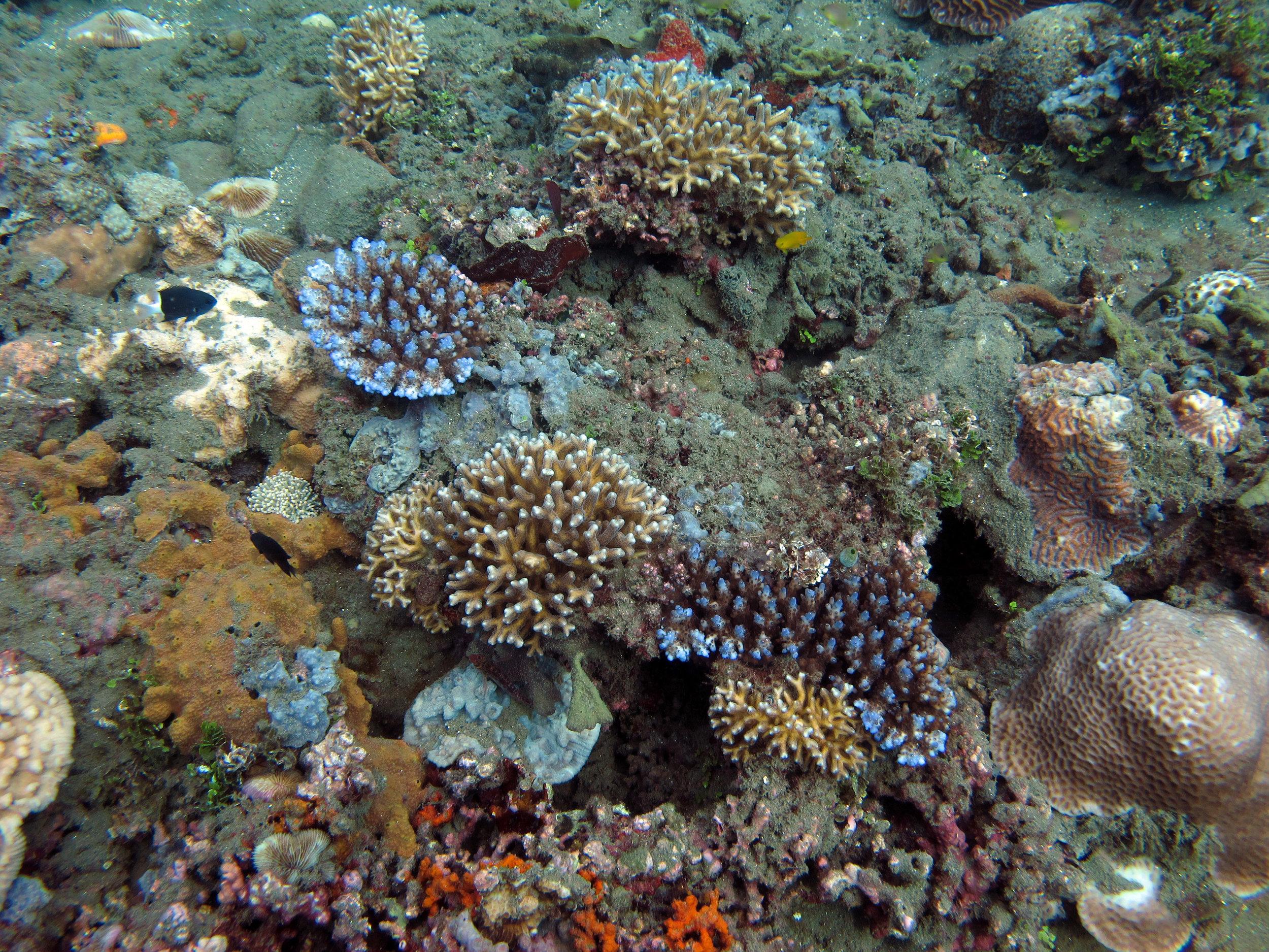 muck reef.jpg
