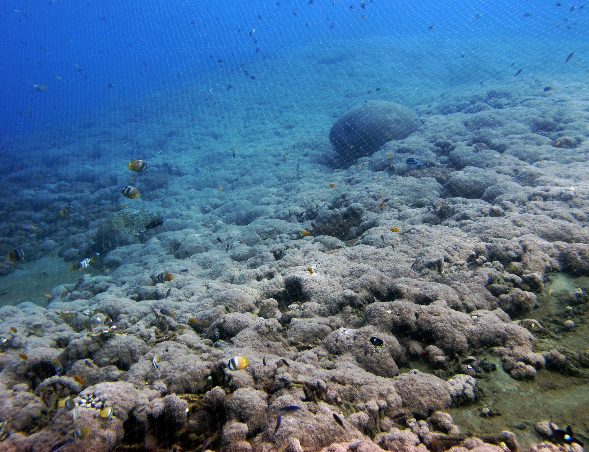 overfishing Ambon.jpg