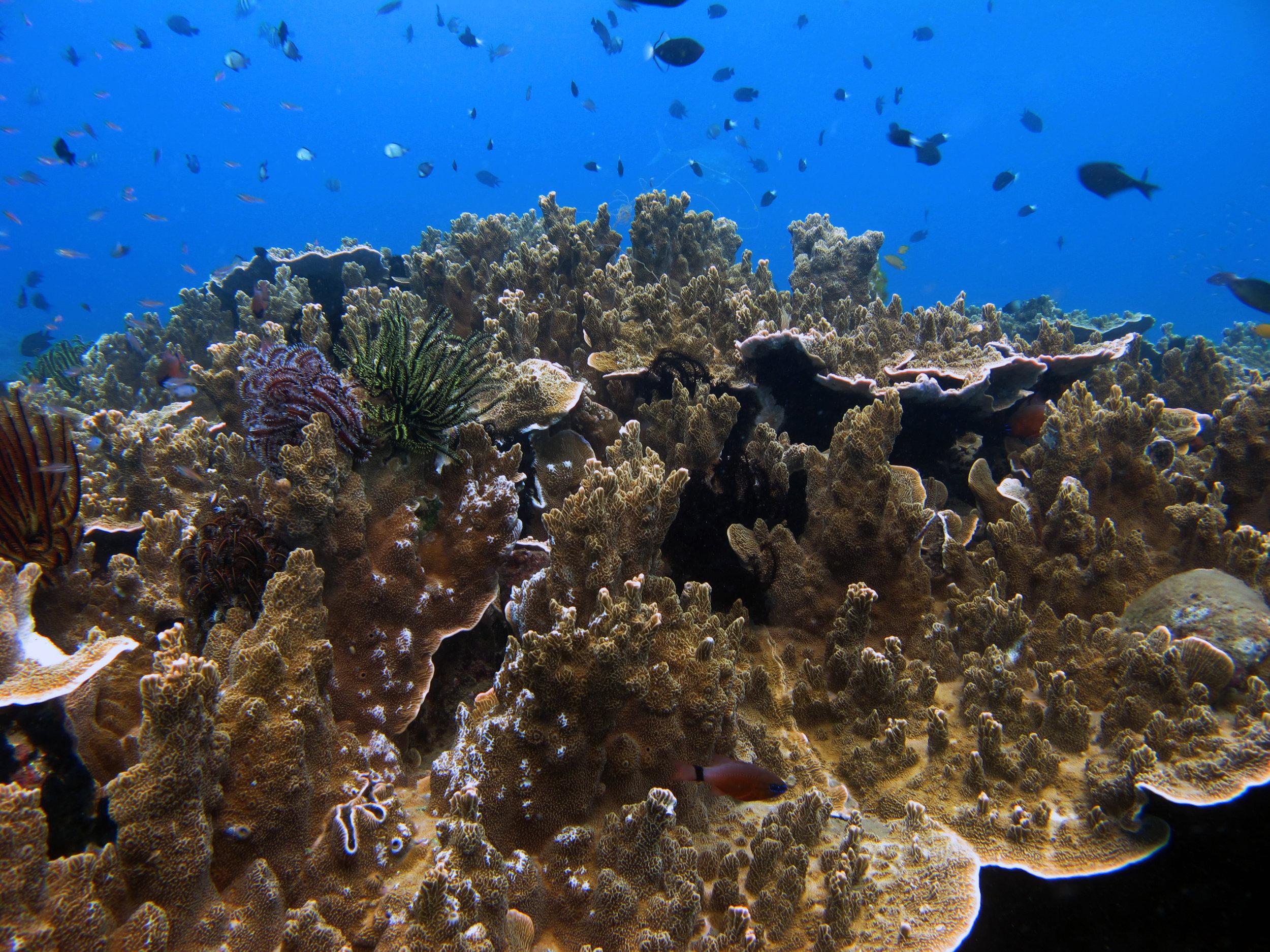 epic Indonesia diving.jpg