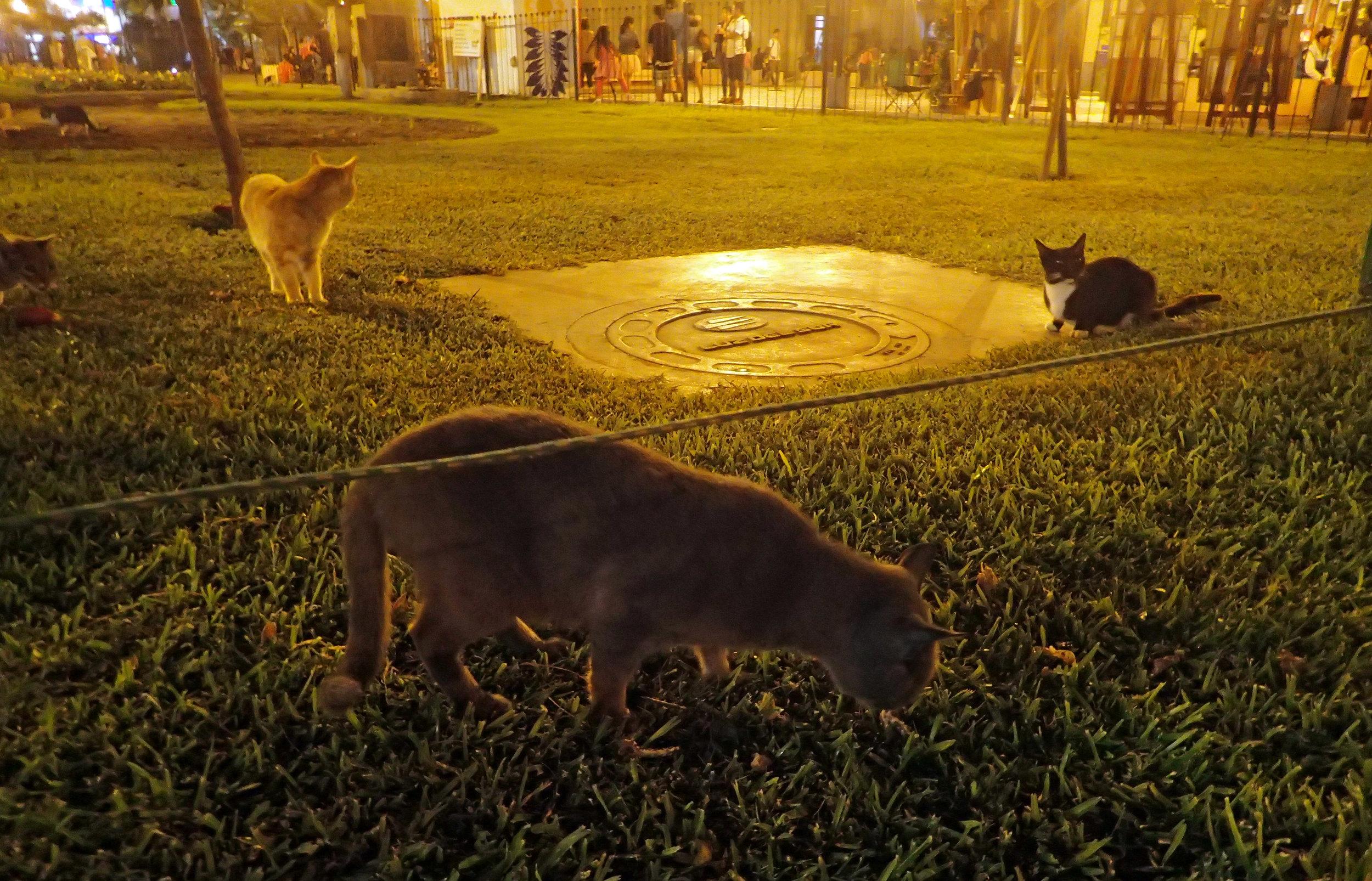 five kitties.jpg
